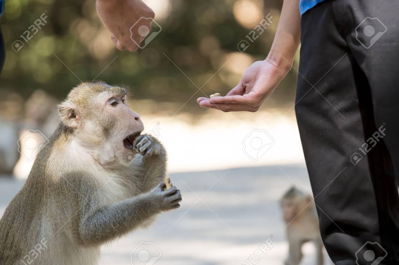 公園の中で、猿の餌付け。 の写真素材・画像素材 Image 36125041.