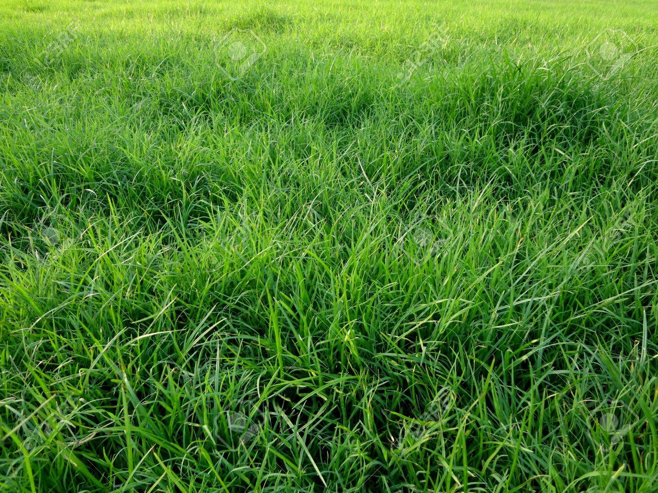 Image result for overgrown grass