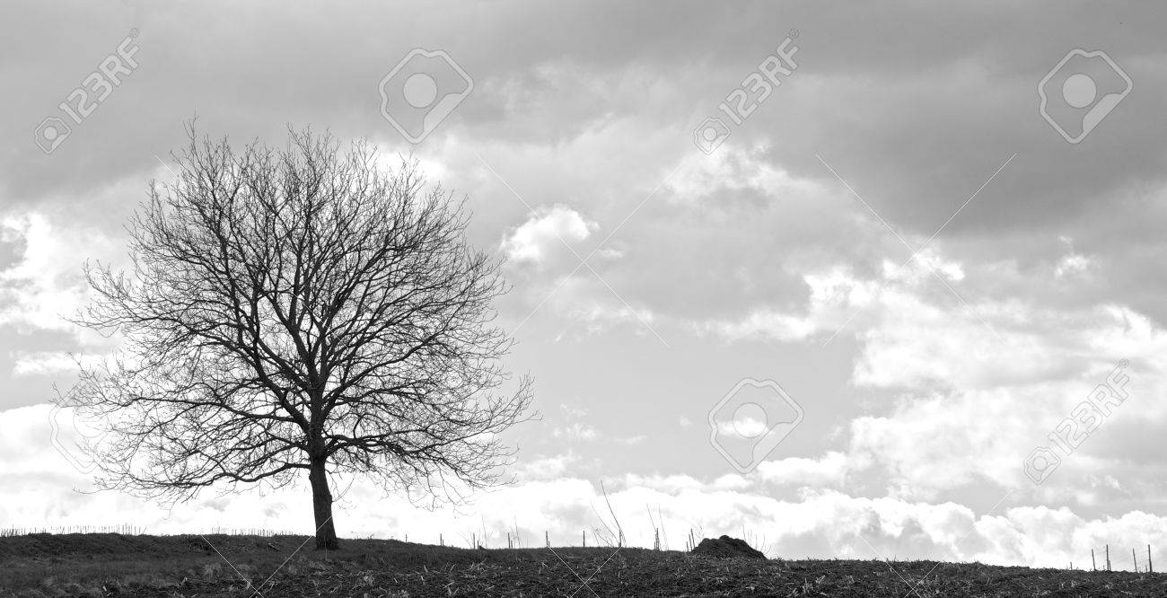 Lonely tree on a field in front of a vineyard with a stormy sky - 21014983