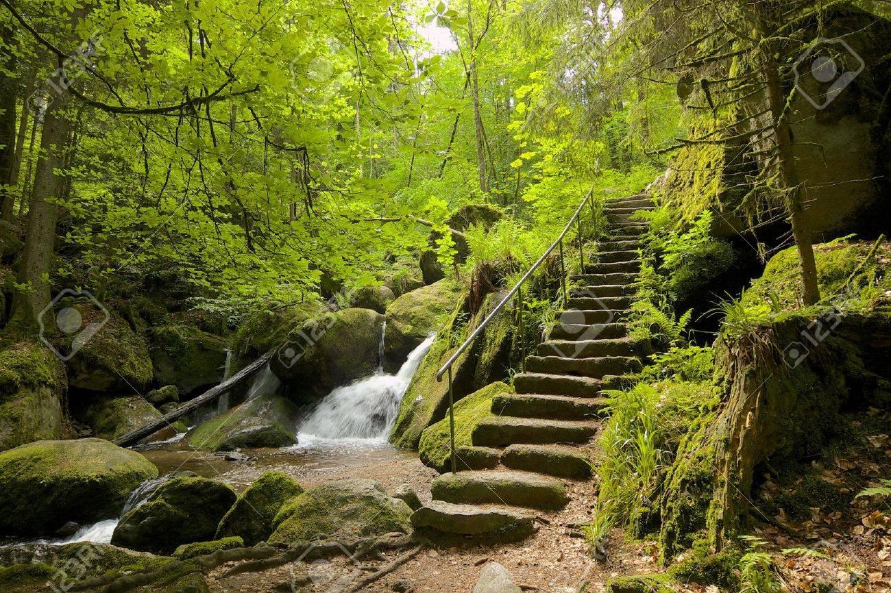 الغابة السوداء في المانيا...! 28341875-Ancient-Bla