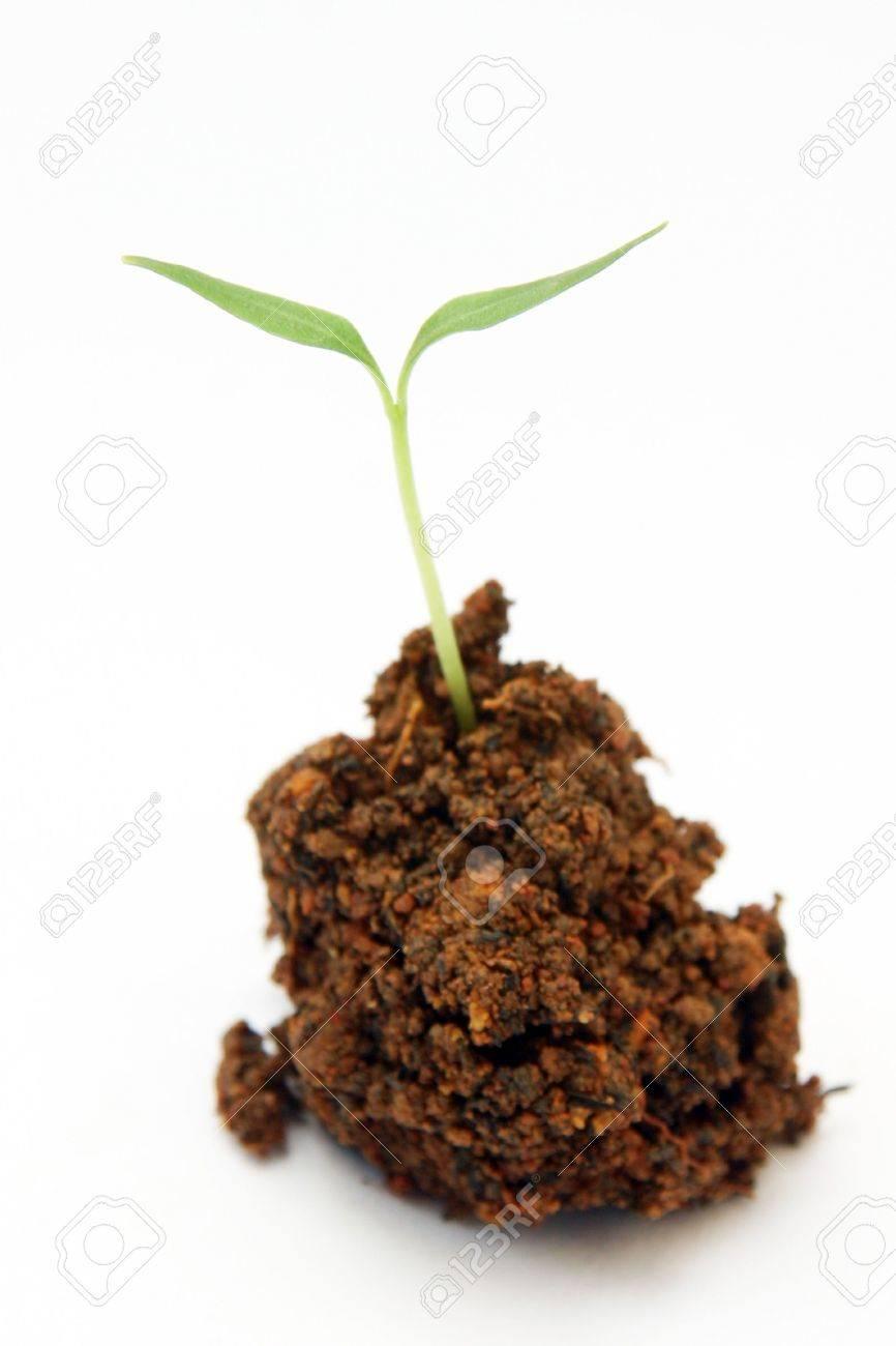 Plant Stock Photo - 631662