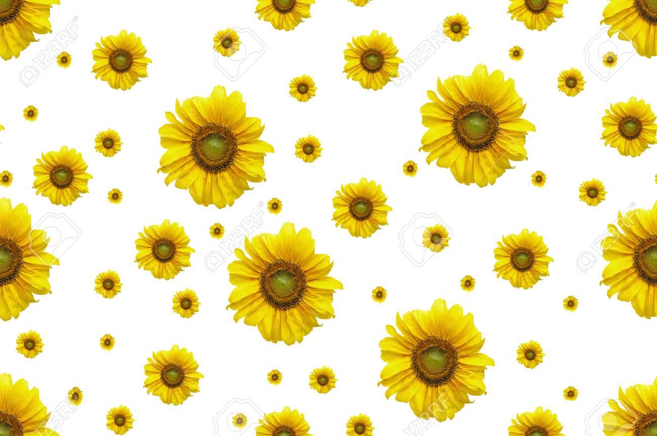 Sfondo Senza Soluzione Di Continuità Con Girasole Fiore I Fiori Sono Girasoli Di Diverse Dimensioni Su Uno Sfondo Bianco