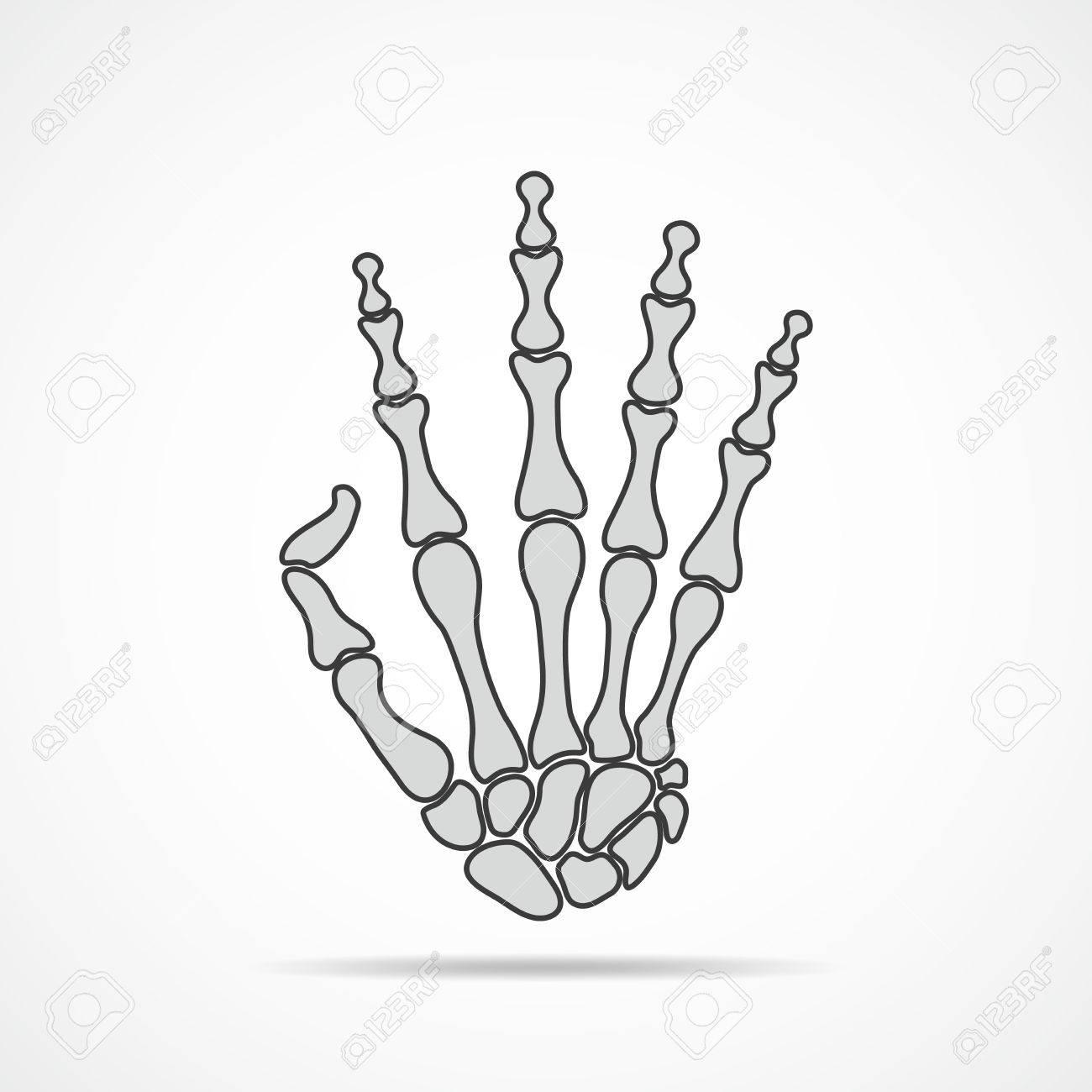 Bones Of Hand On Light Background. Skeleton Hand. Vector ...