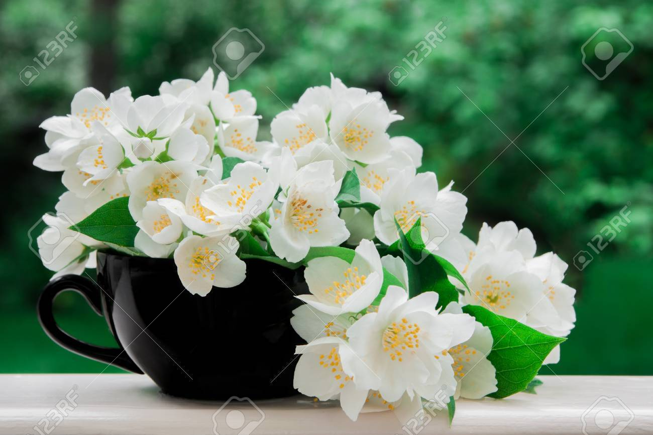 jasmine flowers in a black cup stock photo picture and royalty free
