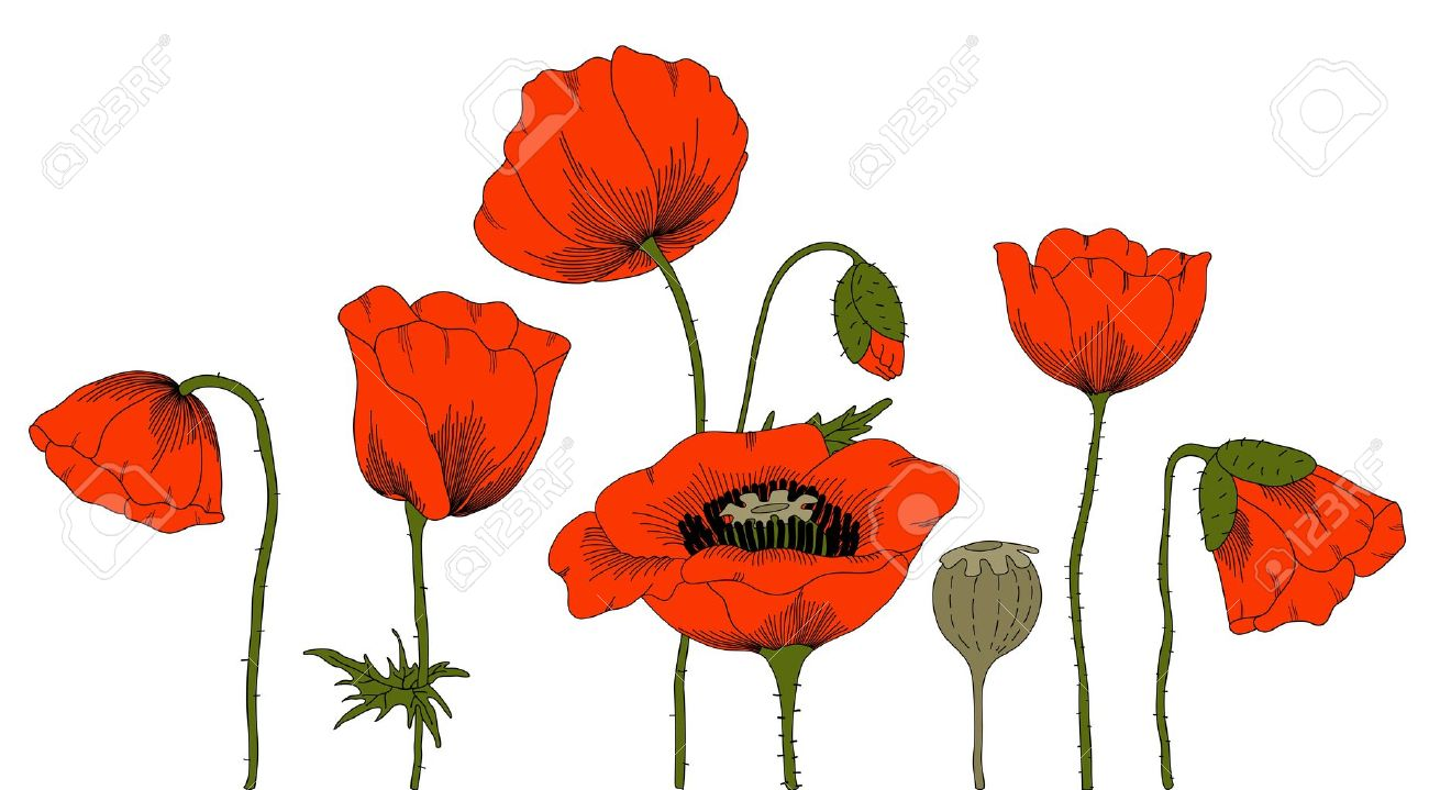 hand drawn fantasy poppies on white. Stock Vector - 10324525