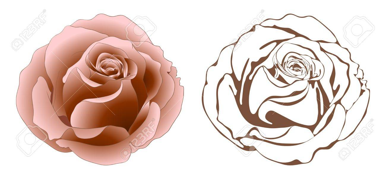 Vector illustration with roses in vintage style. Stock Vector - 13152096