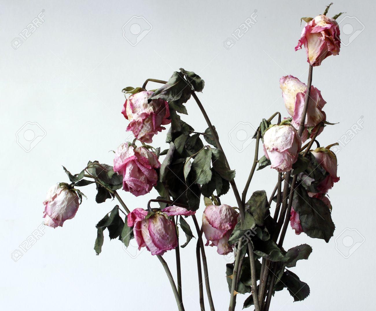 Fleurs Fanees Sechees Dessechees Dans Le Milieu Blanc Banque D
