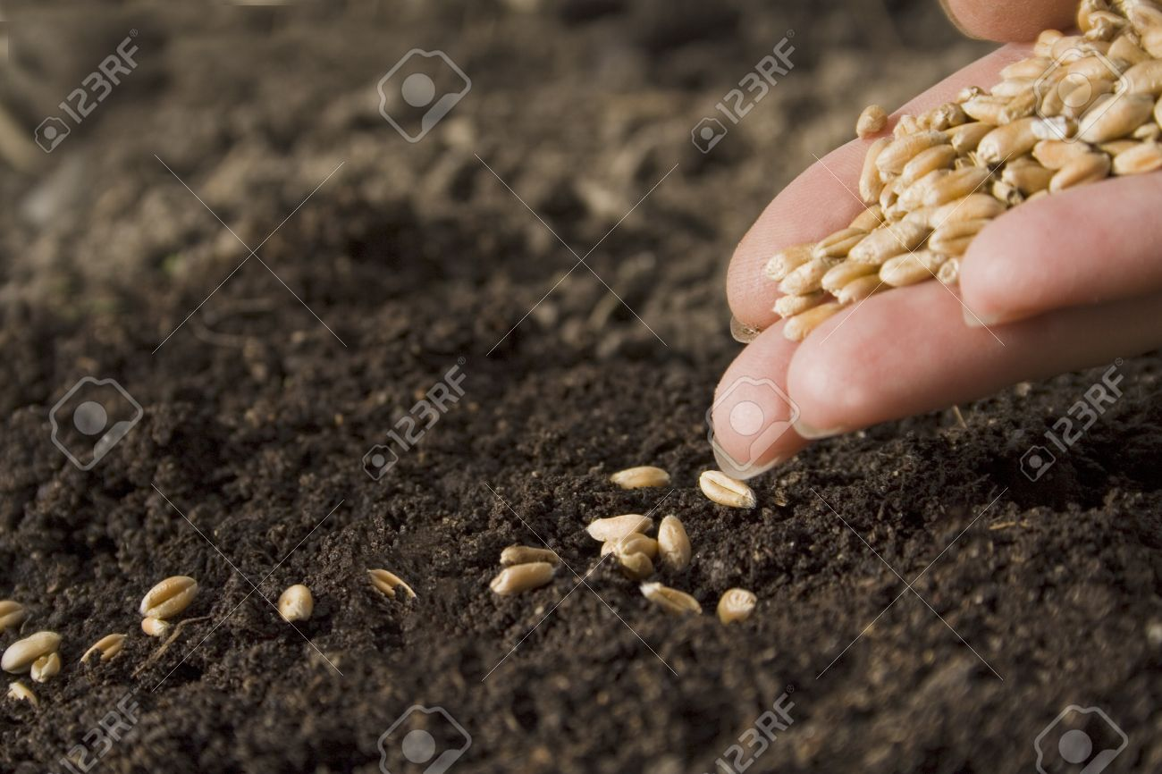 sowing seed Stock Photo - 11400067