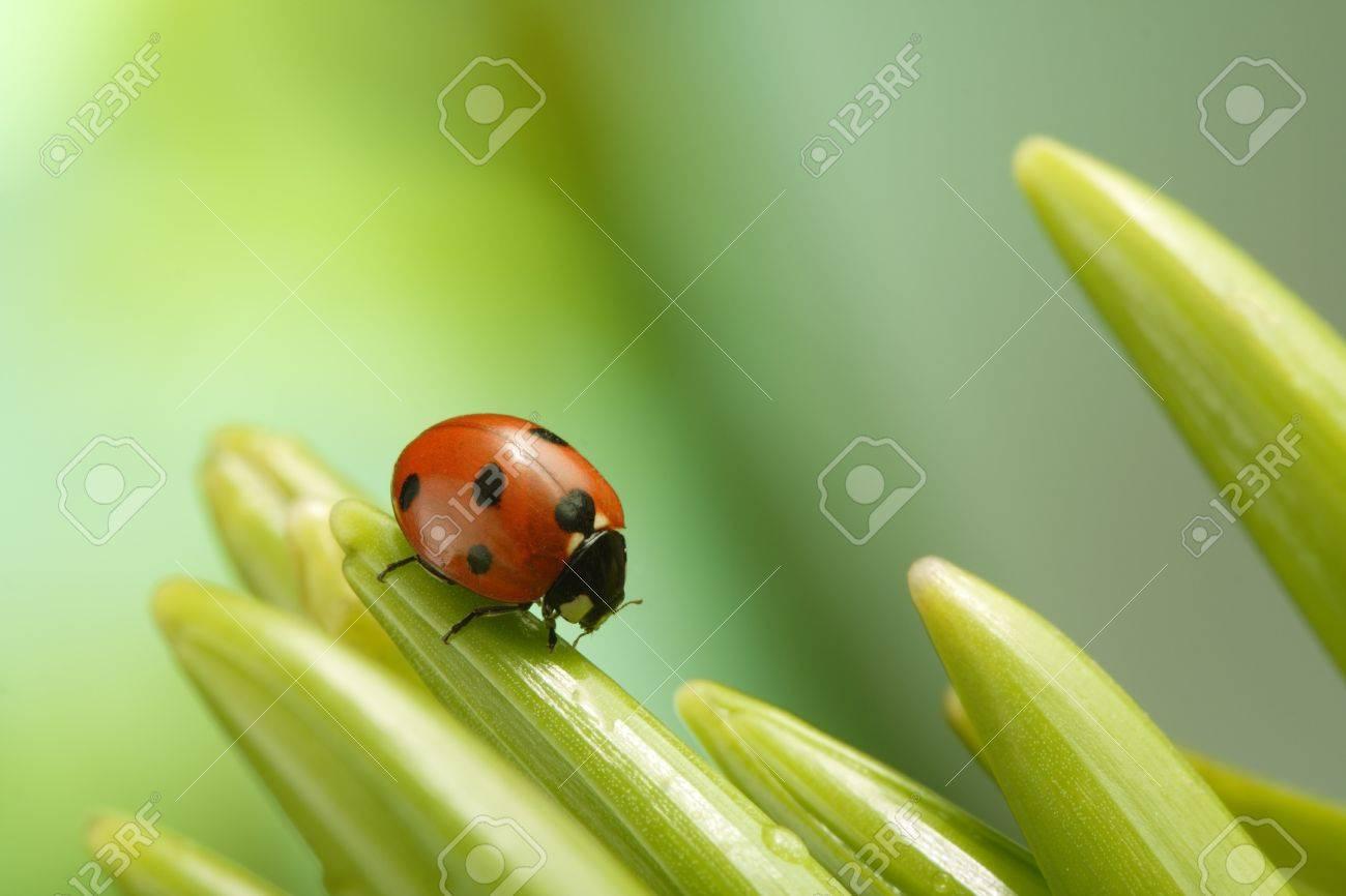 ladybug - 11661671