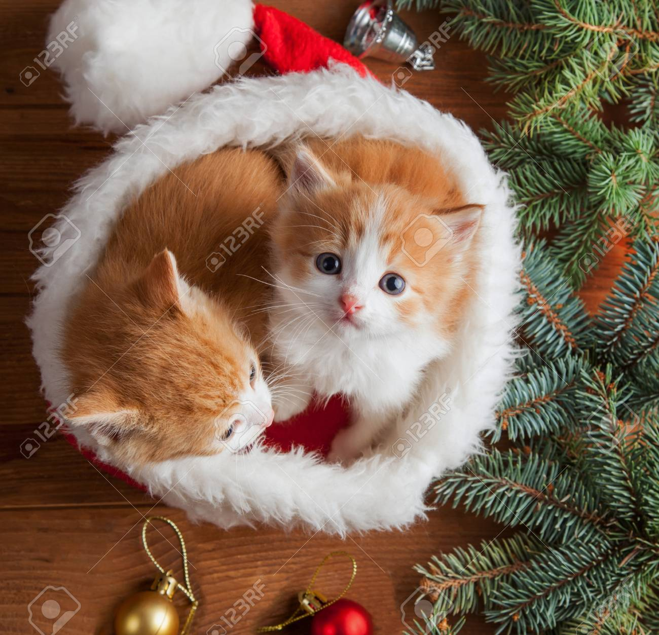 ginger kitten in santa hat against the background of a Christmas tree - 108321559