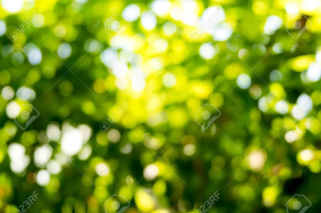 Green Bokeh Photography Backdrop