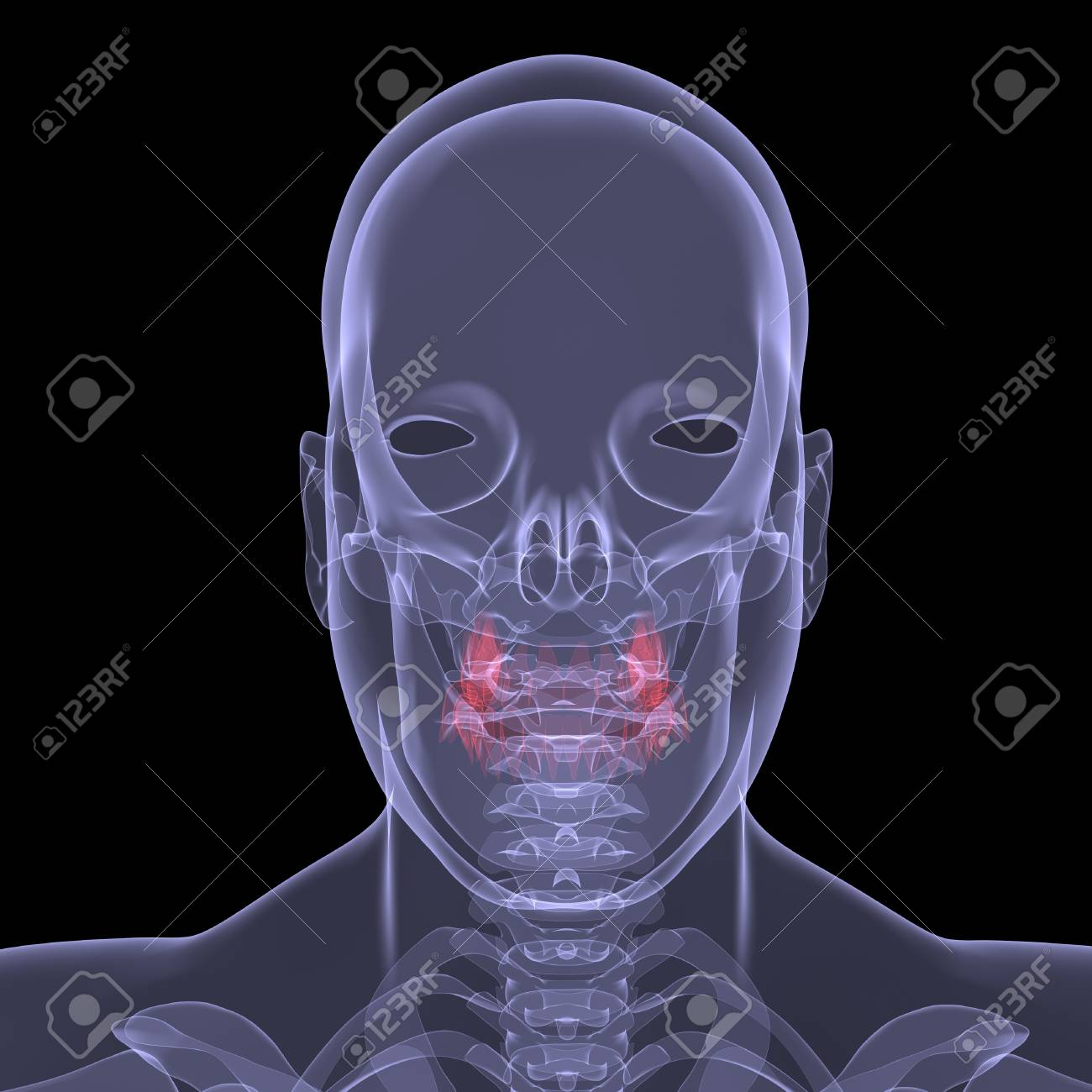 X-Ray picture of a person  Sore digestion  Isolated render on a black background Stock Photo - 19443565