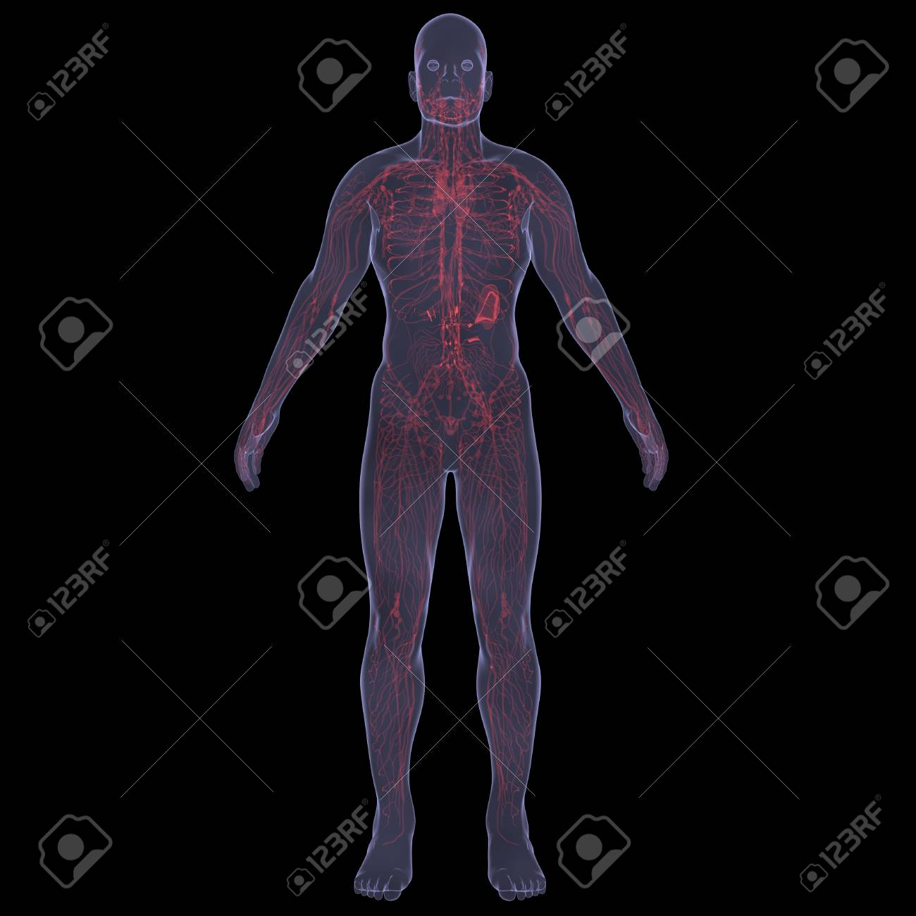 X-Ray picture of a person  Sore digestion  Isolated render on a black background Stock Photo - 19443544