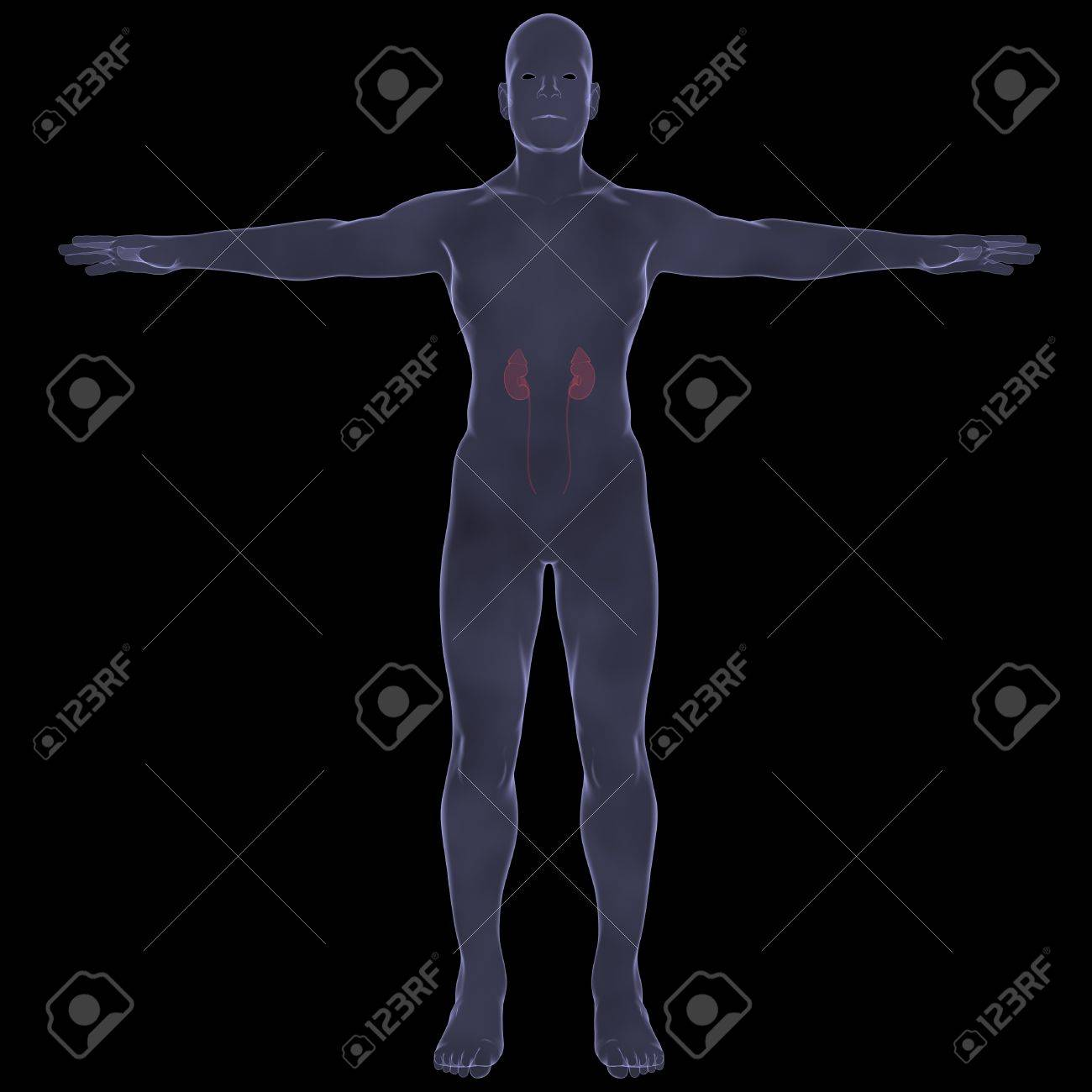 X-Ray picture of a person  Sore digestion  Isolated render on a black background Stock Photo - 19443573