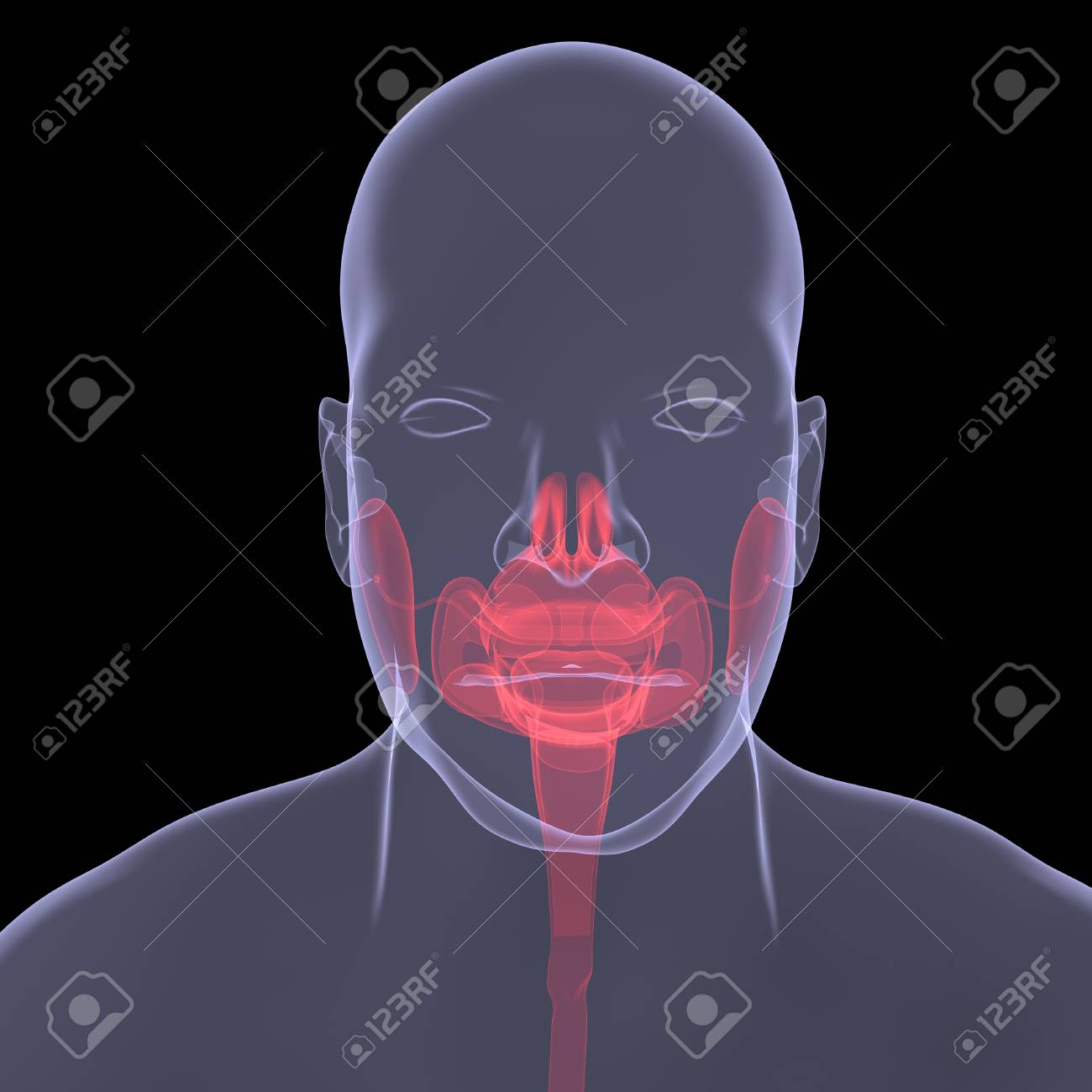 X-Ray picture of a person. Sore digestion. Isolated render on a black background Stock Photo - 21377077