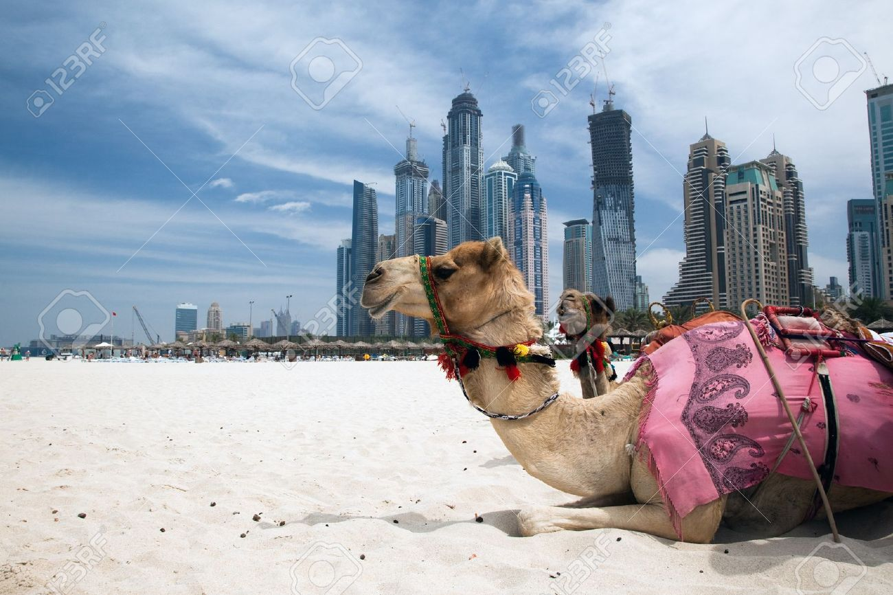 Camel at the urban background of dubai stock photo picture and camel at the urban background of dubai stock photo 10273822 thecheapjerseys Image collections