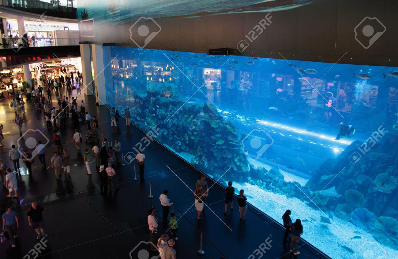 The Largest Indoor Aquarium in