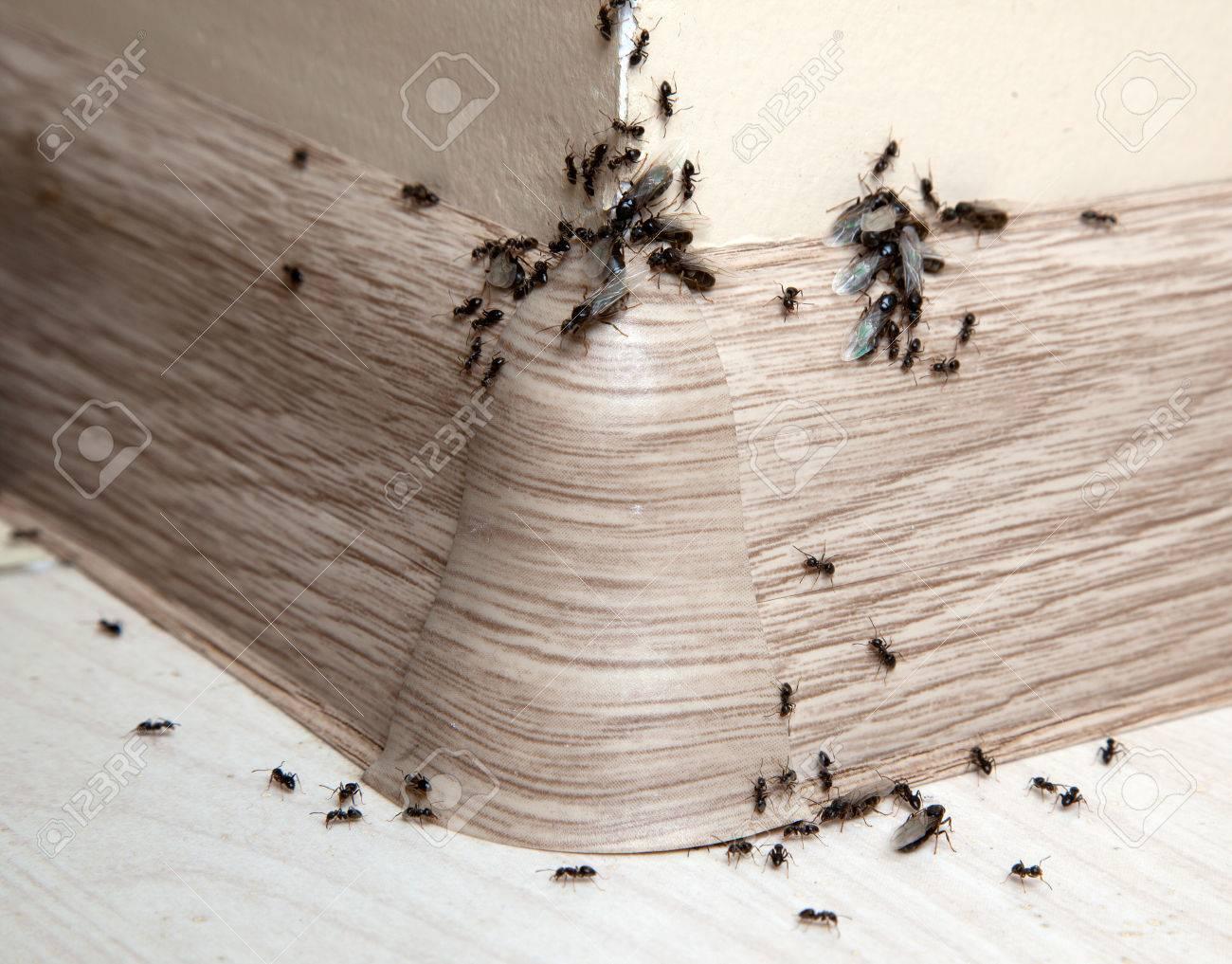 退治 小さい 蟻