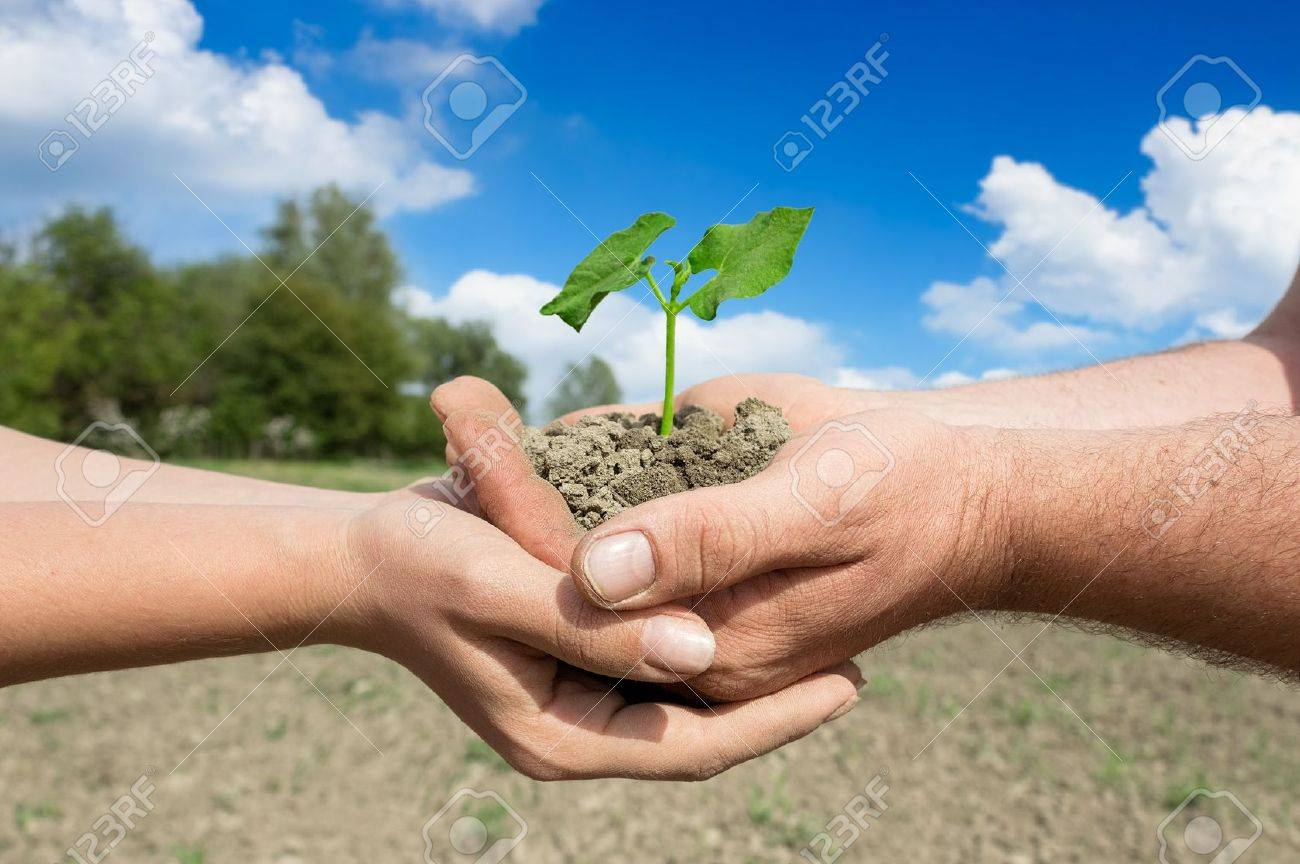 Hands of couple farmers holding young green plant, concept – farming family business Standard-Bild - 20956199