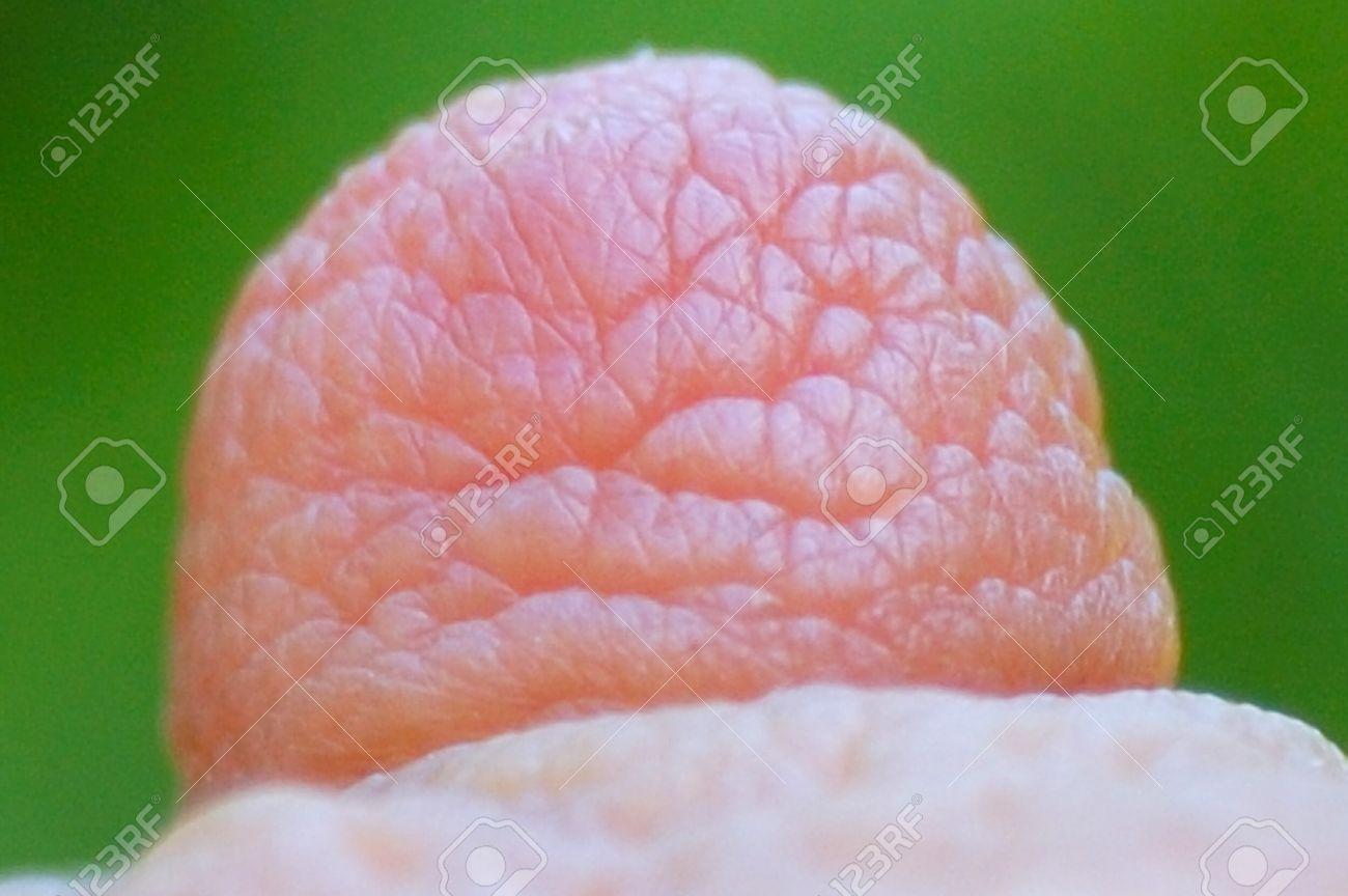 Close Up Of Nipples