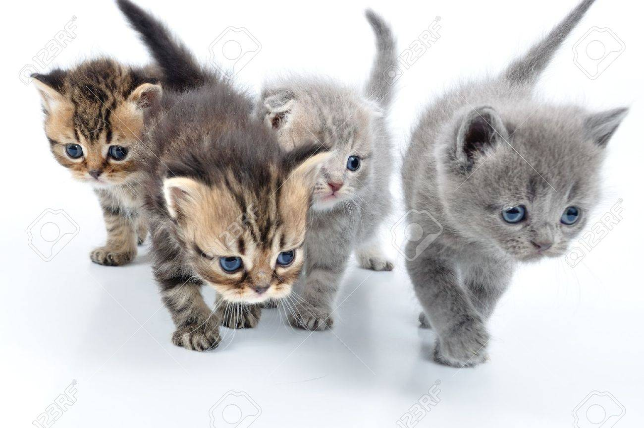 group of small 3 weeks old kittens walking towards Stock Photo - 12847744
