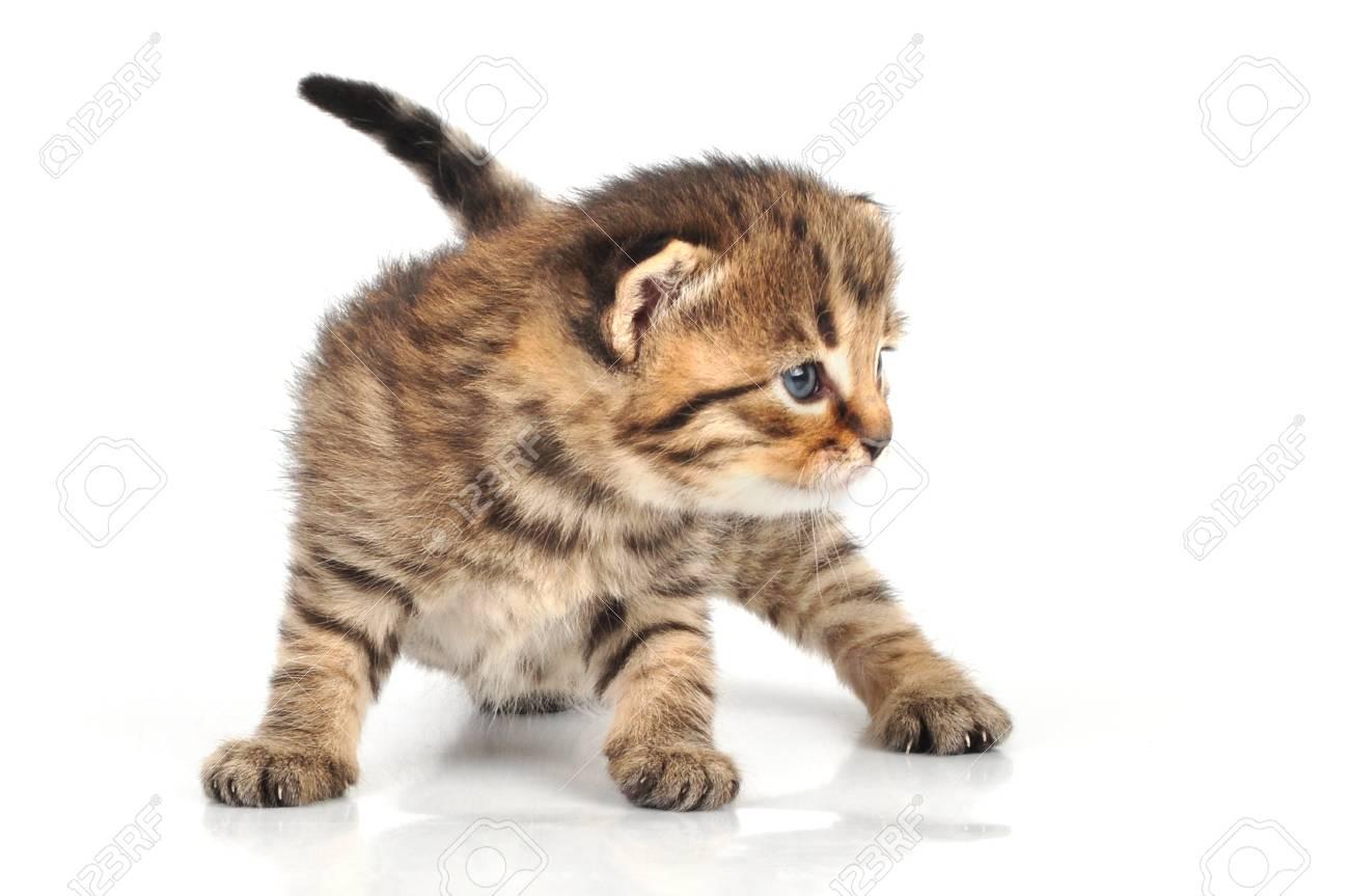 beautiful cute 20 days old small kitten
