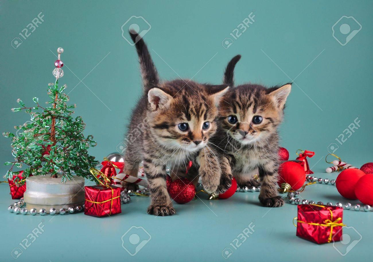 Christmas Stuff.Small Kittens Among Christmas Stuff Studio Shot
