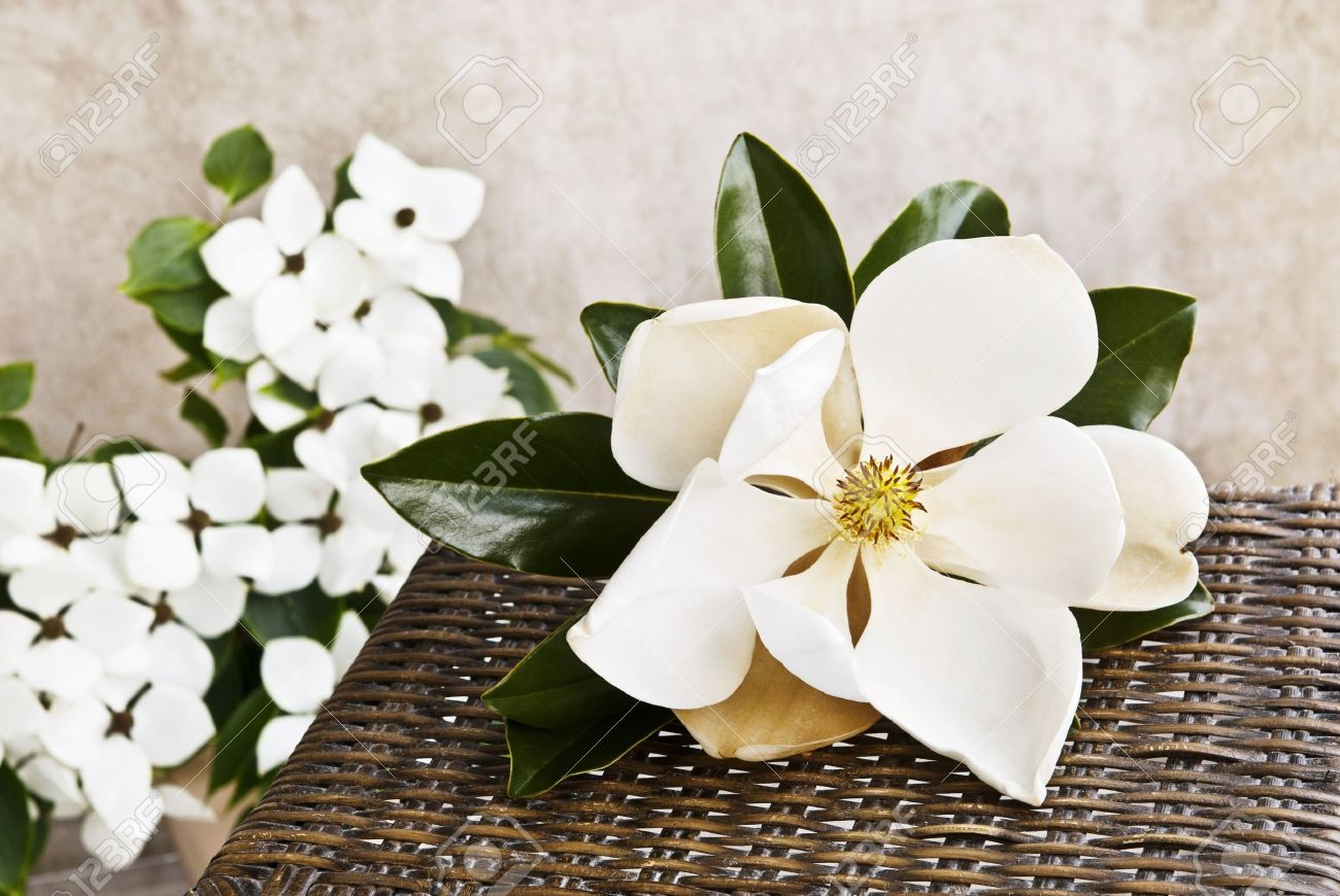 A Beautiful Large Magnolia Bloom On A Table With White Dogwood