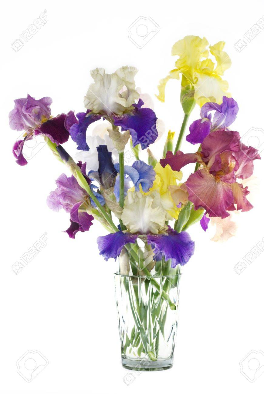 A crystal vase full of cut multicolored hybrid bearded irises a crystal vase full of cut multicolored hybrid bearded irises vertical with copy space stock floridaeventfo Images