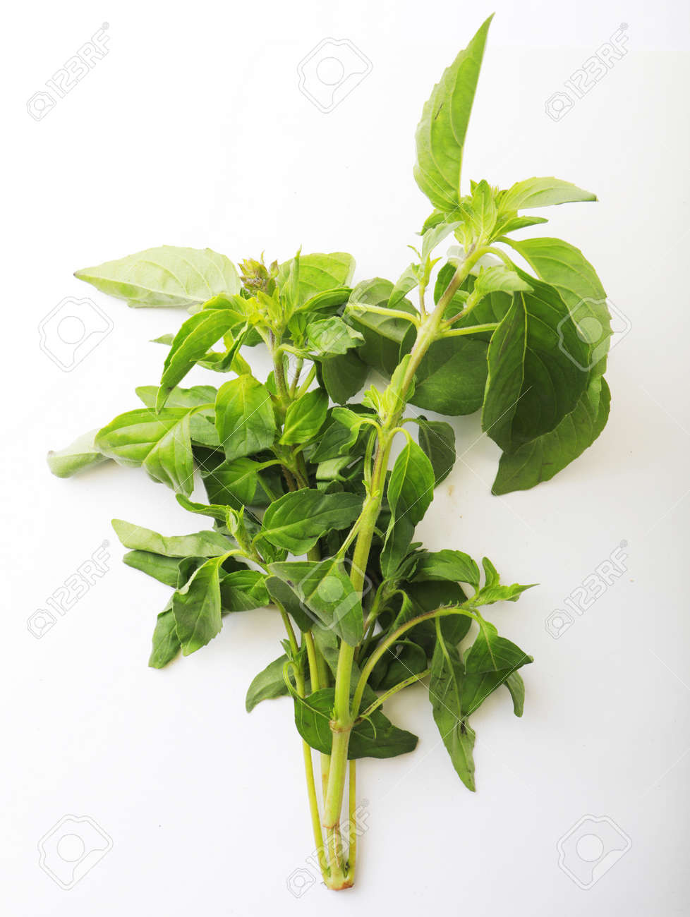 Fresh mint bunch on white background. Top view. Close-up. - 166879470