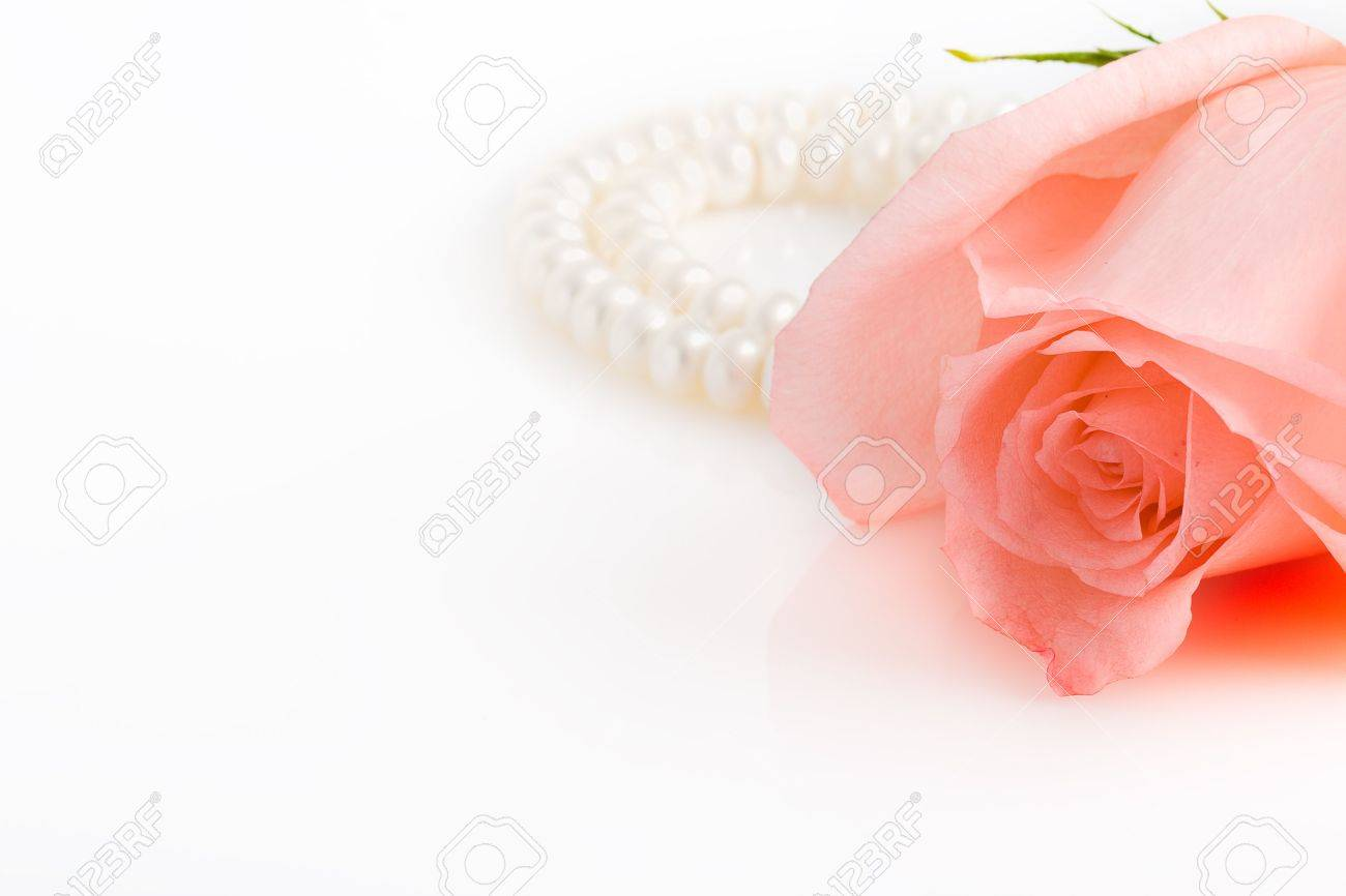 right position pink rose bud, pearl necklace with copy space at the left side Stock Photo - 2988560