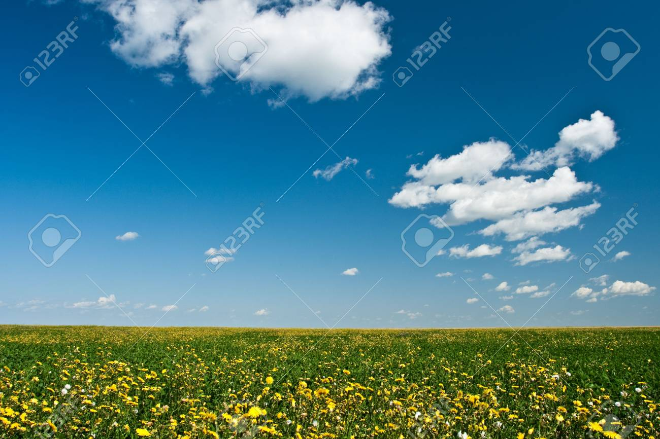 yellow flowers filed under blue skies Stock Photo - 5524692