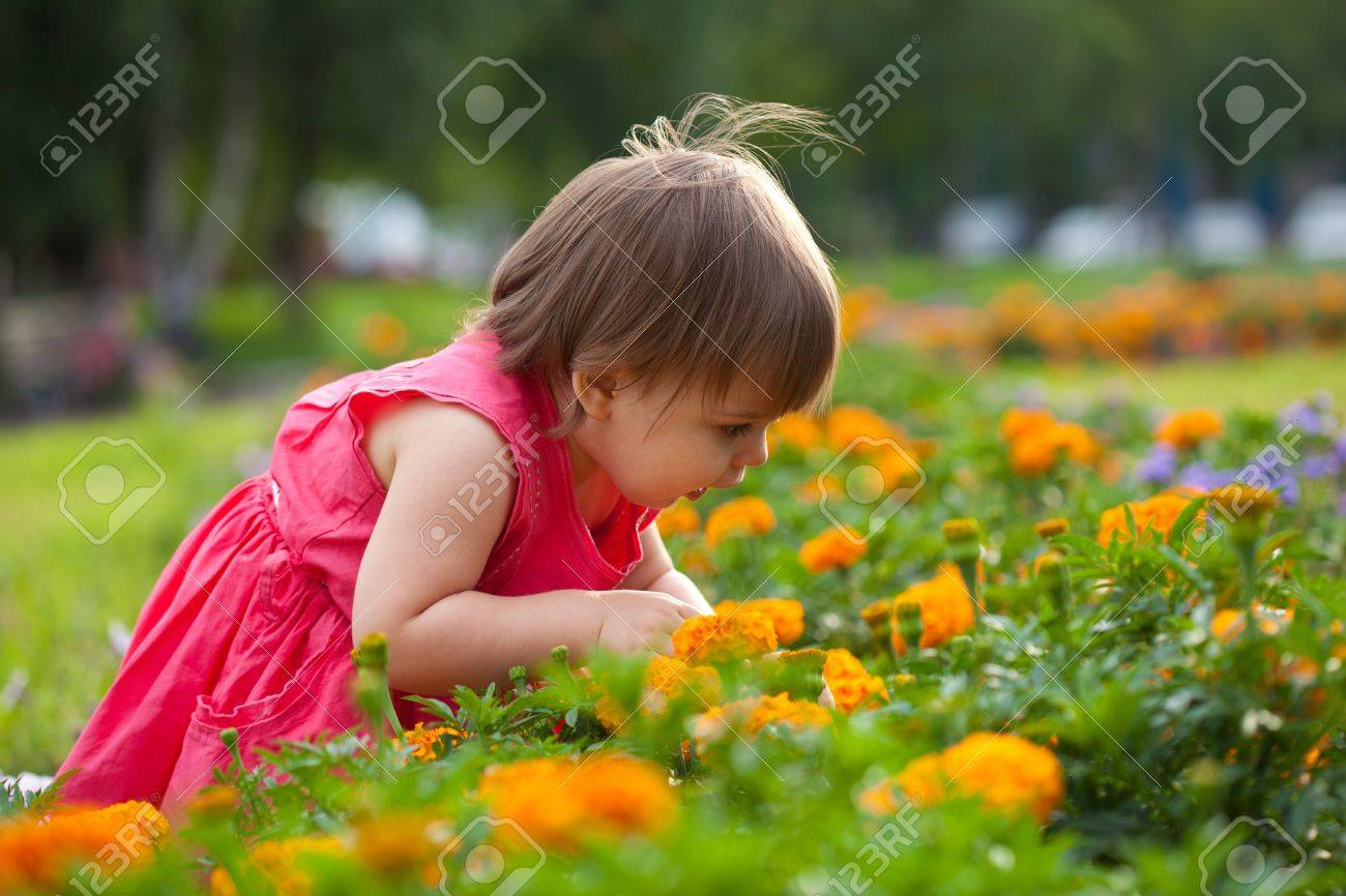 little girl looking for something in flowers stock photo, picture, Beautiful flower