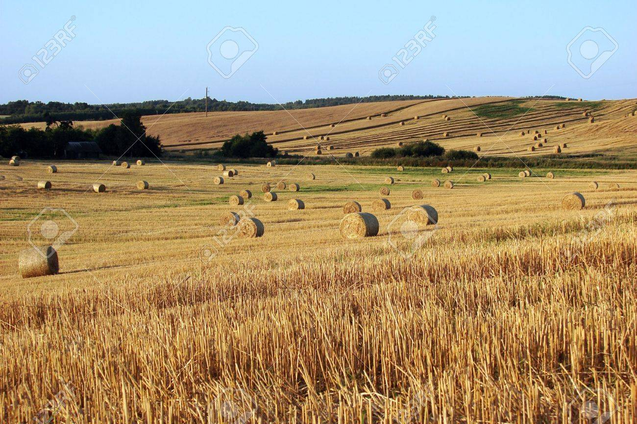 Straw bales on field and hill Stock Photo - 5321309