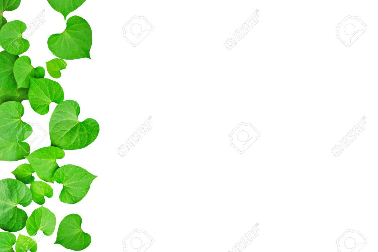 Natürliche Herzförmige Grüne Blätter, Soft-Fokus Auf Weißen ...