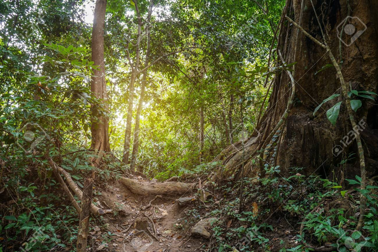 jungle path in tropical rainforest background stock photo picture