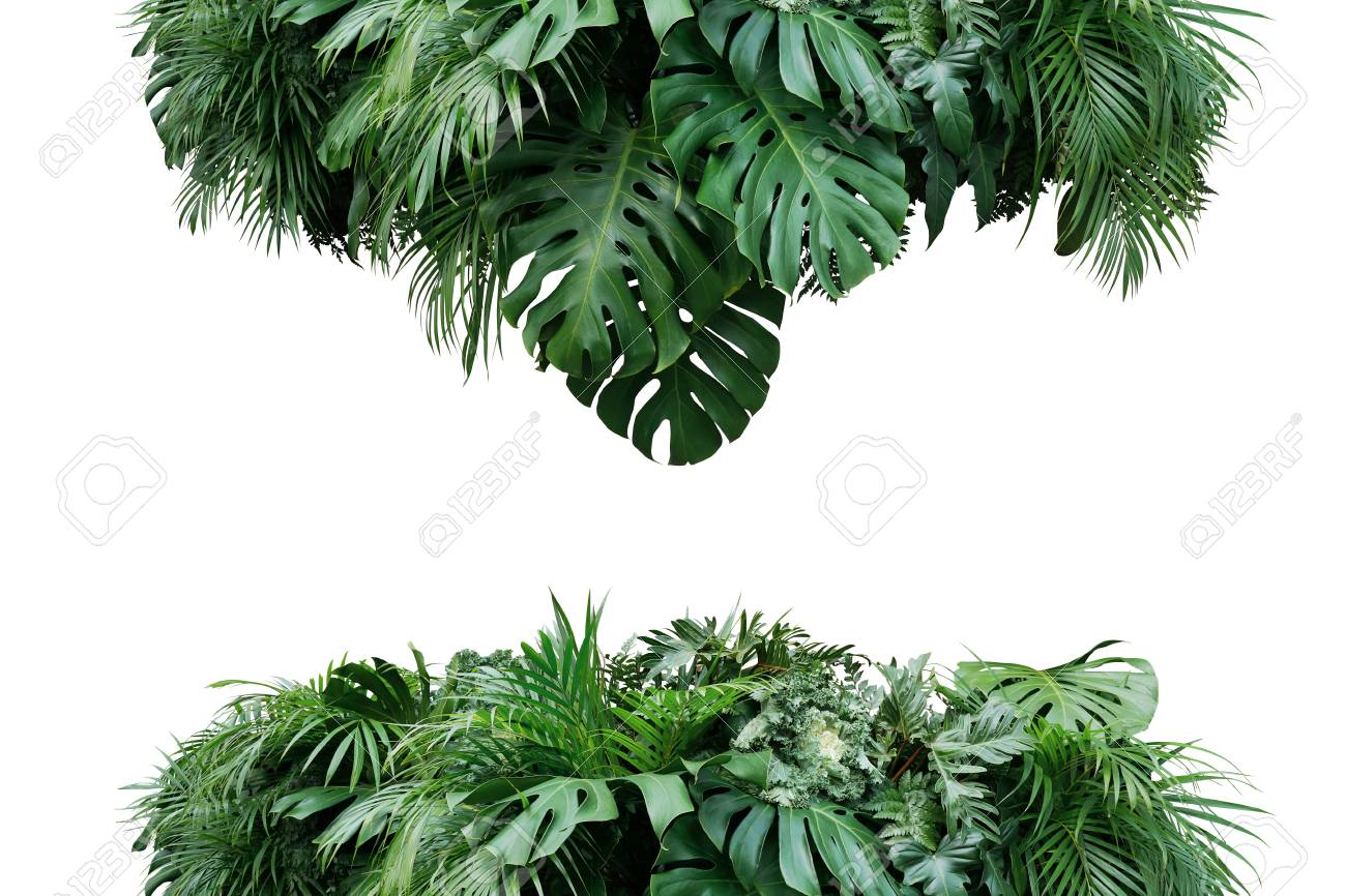 Tropical Leaves Foliage Plant Bush Floral Arrangement Nature Stock Photo Picture And Royalty Free Image Image 103544461 Shop nearly natural tropical arrangements of silk tropical flowers; 123rf com