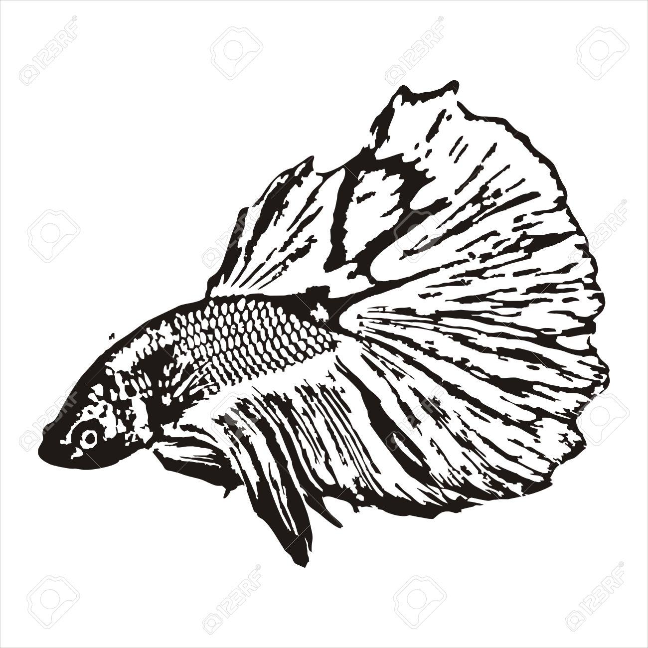 Fighting fish, Betta splendens sketch Stock Vector - 20364598