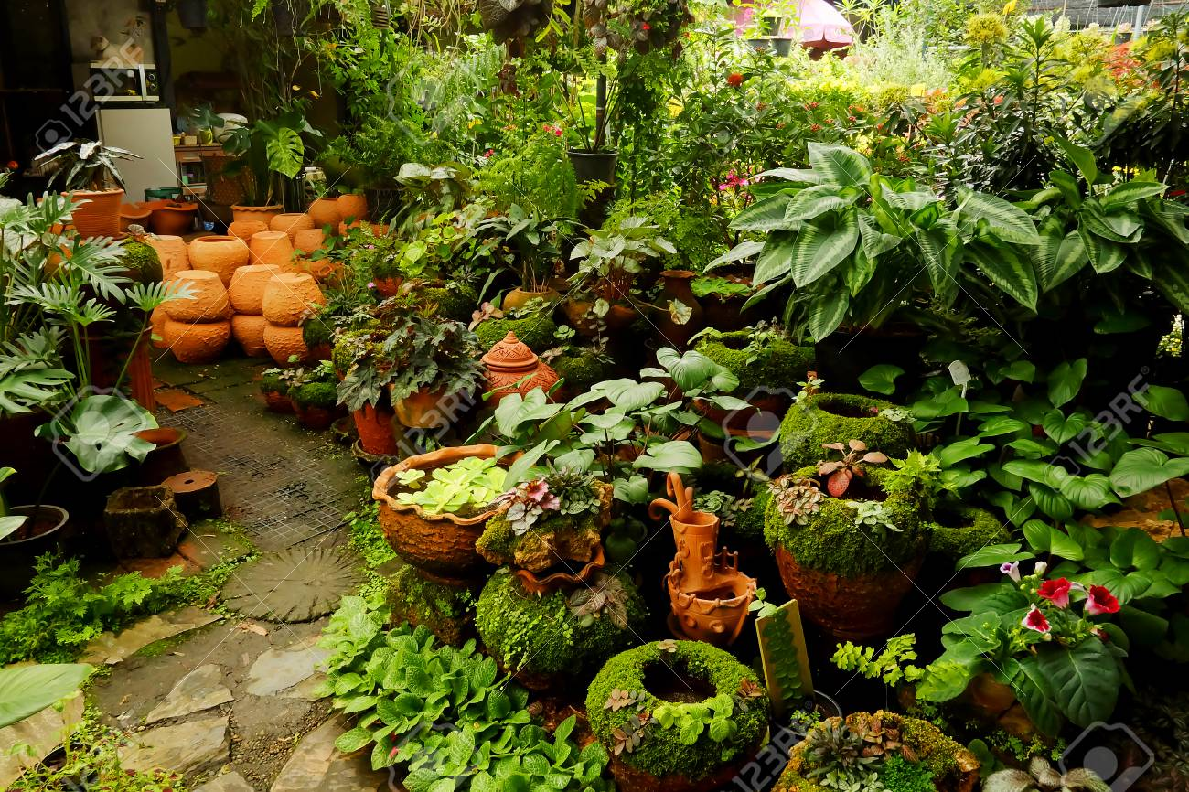Tropical Plant And Flower Gardening Shop. Business Selling For ...