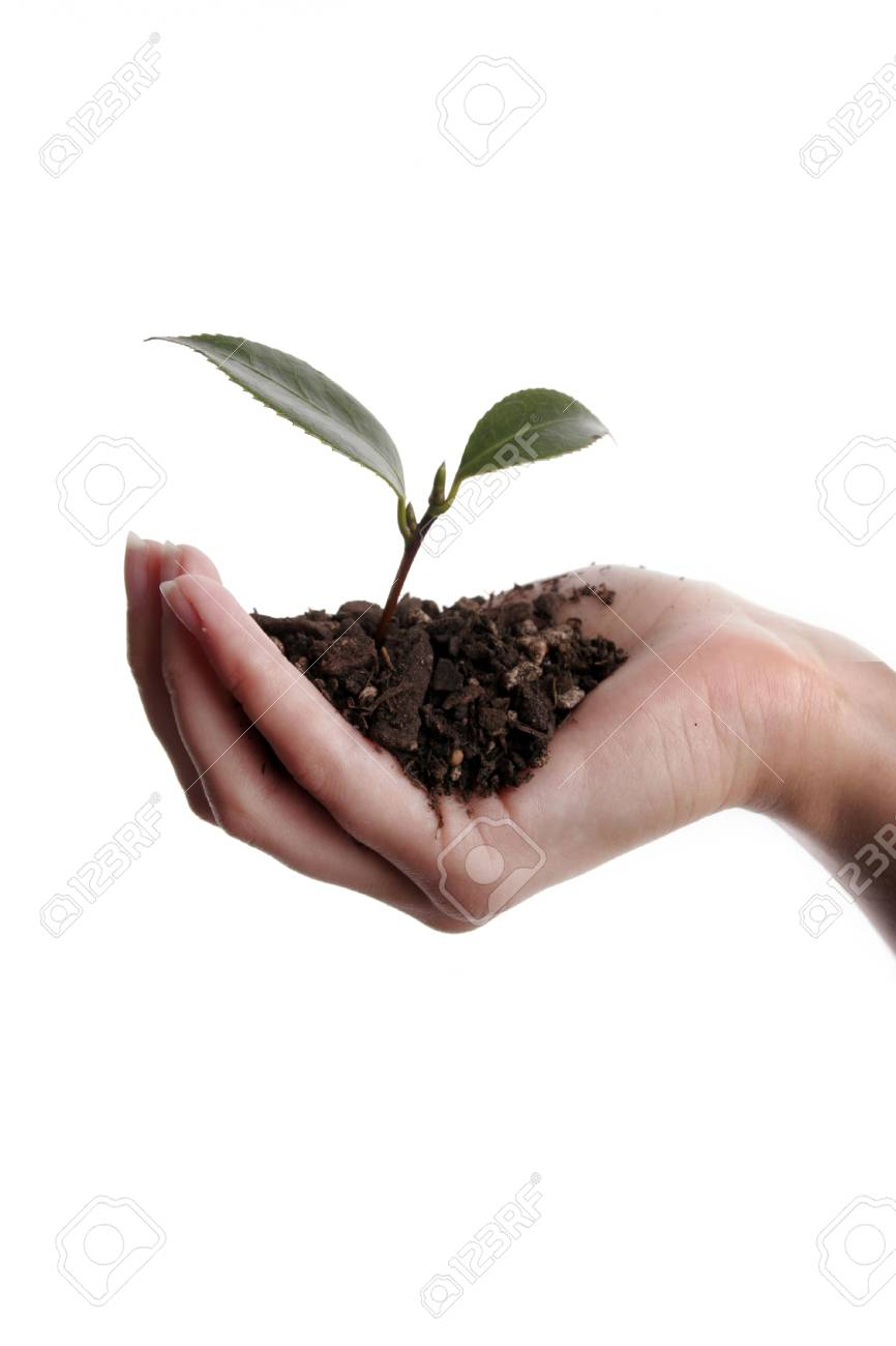 Seedling and soil held in hand isolated on white background Stock Photo - 884603