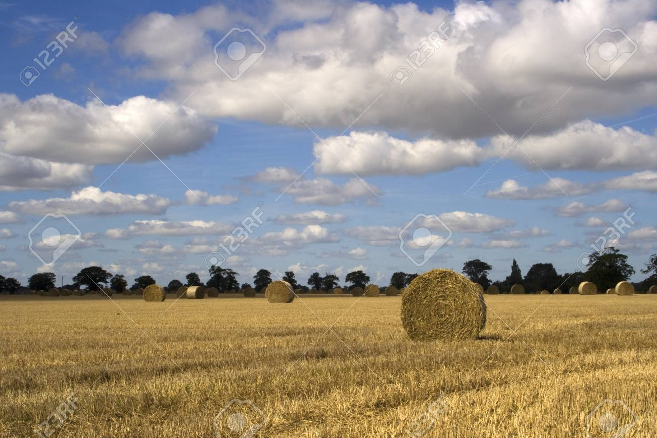 Straw bales in Suffolk, against a background of trees and fluffy white clouds Stock Photo - 16819131