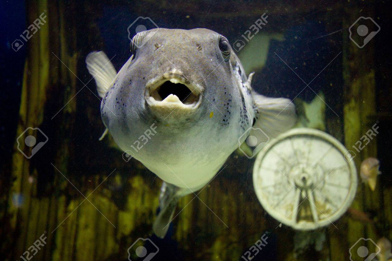 Ugly Fish Stock Photo Picture And Royalty Free Image Image 5991189