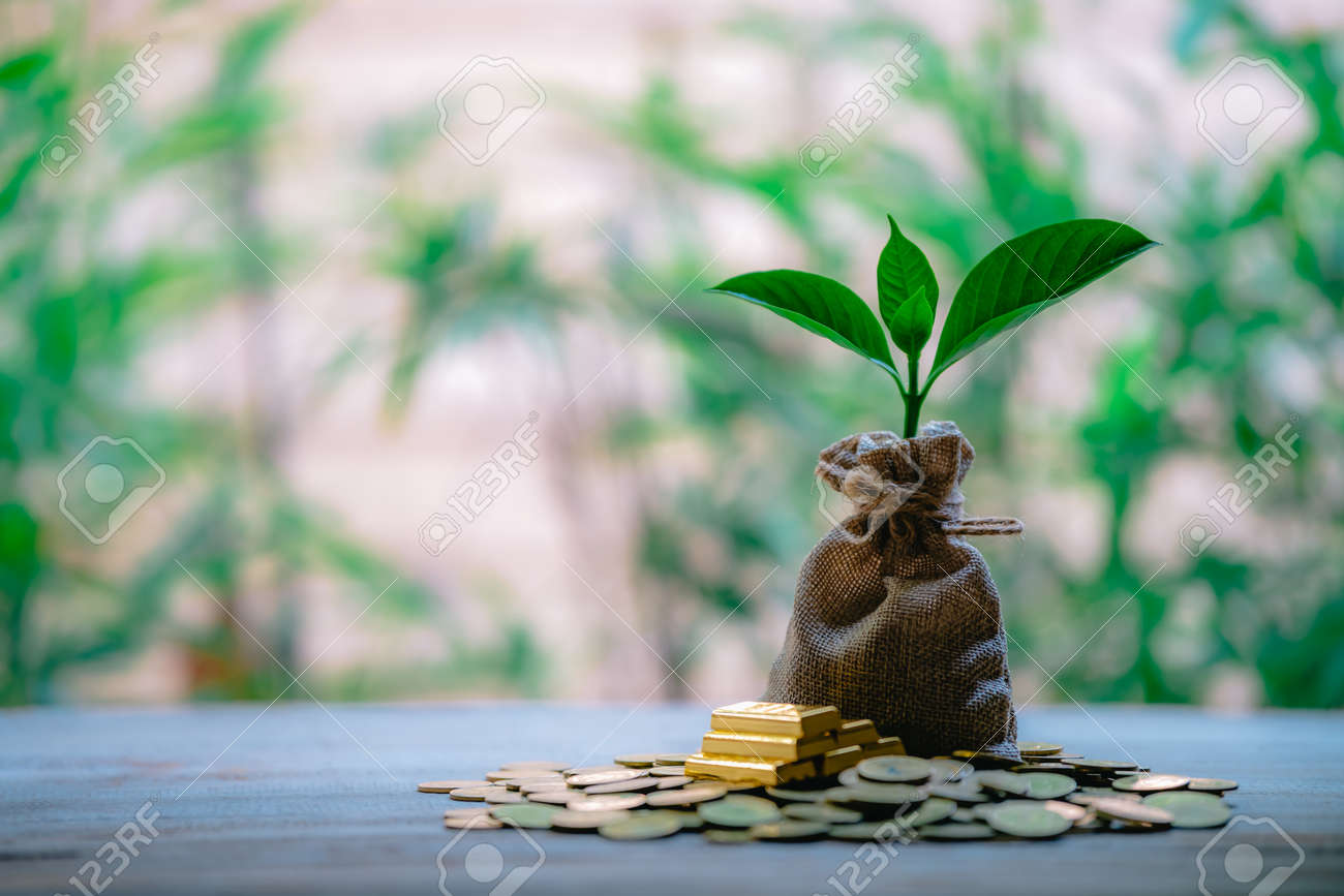 Plant Growing In Savings Coins - Money, Financial, Business Growth concept. - 122398218