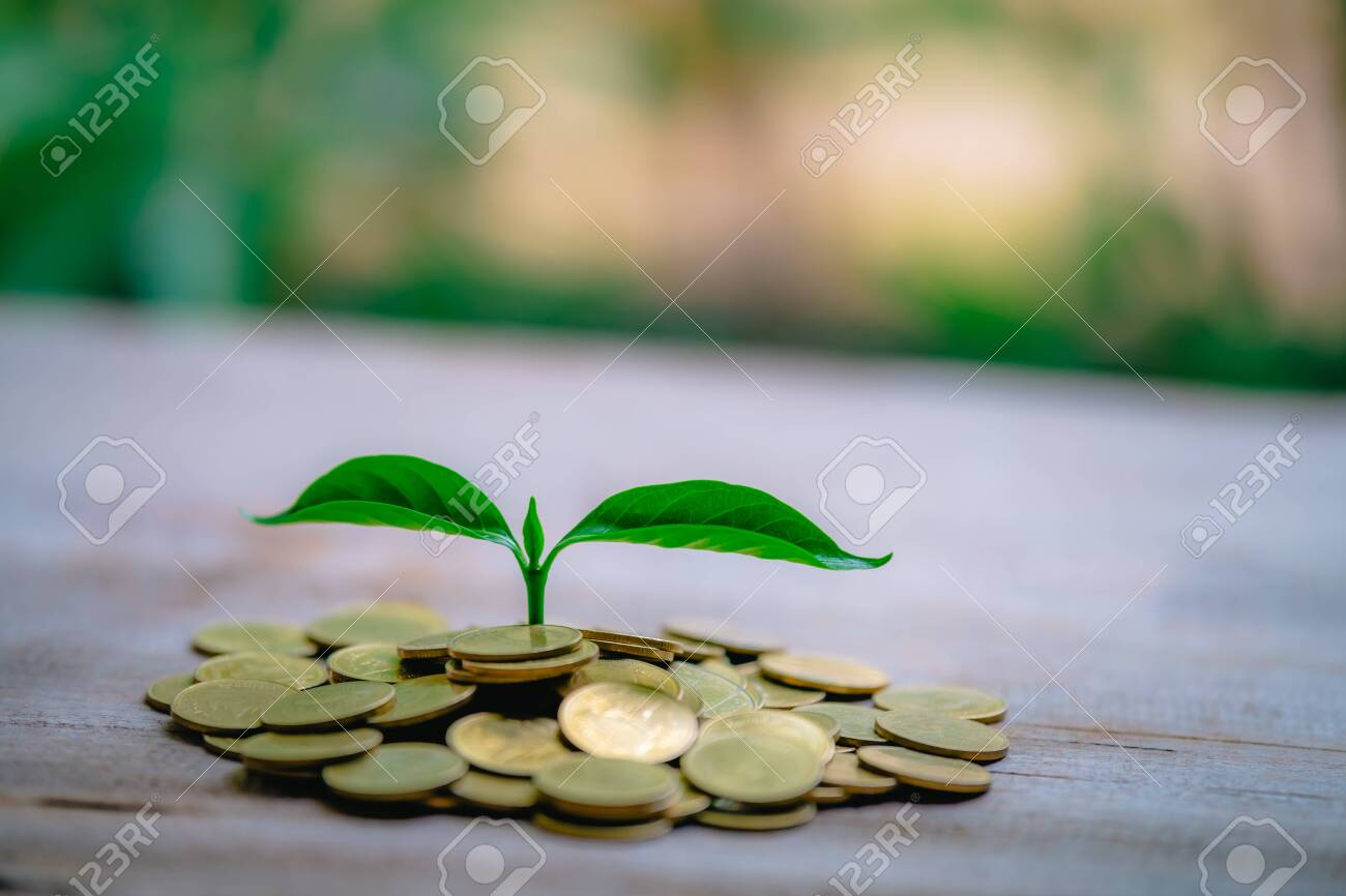 Cropping on coins - investment ideas for growth - 122398226