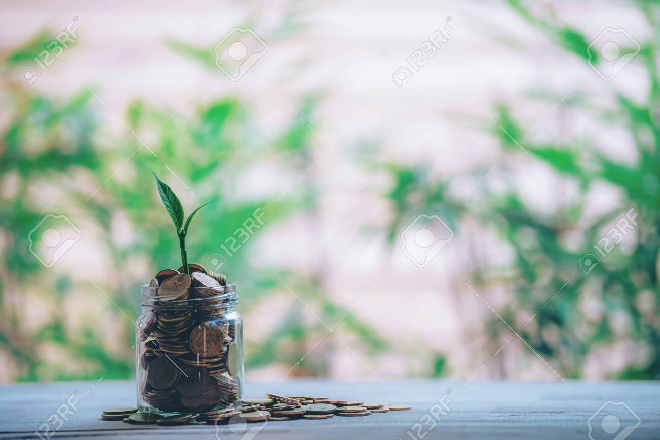 Plant Growing In Savings Coins - Money, Financial, Business Growth concept. - 122398227