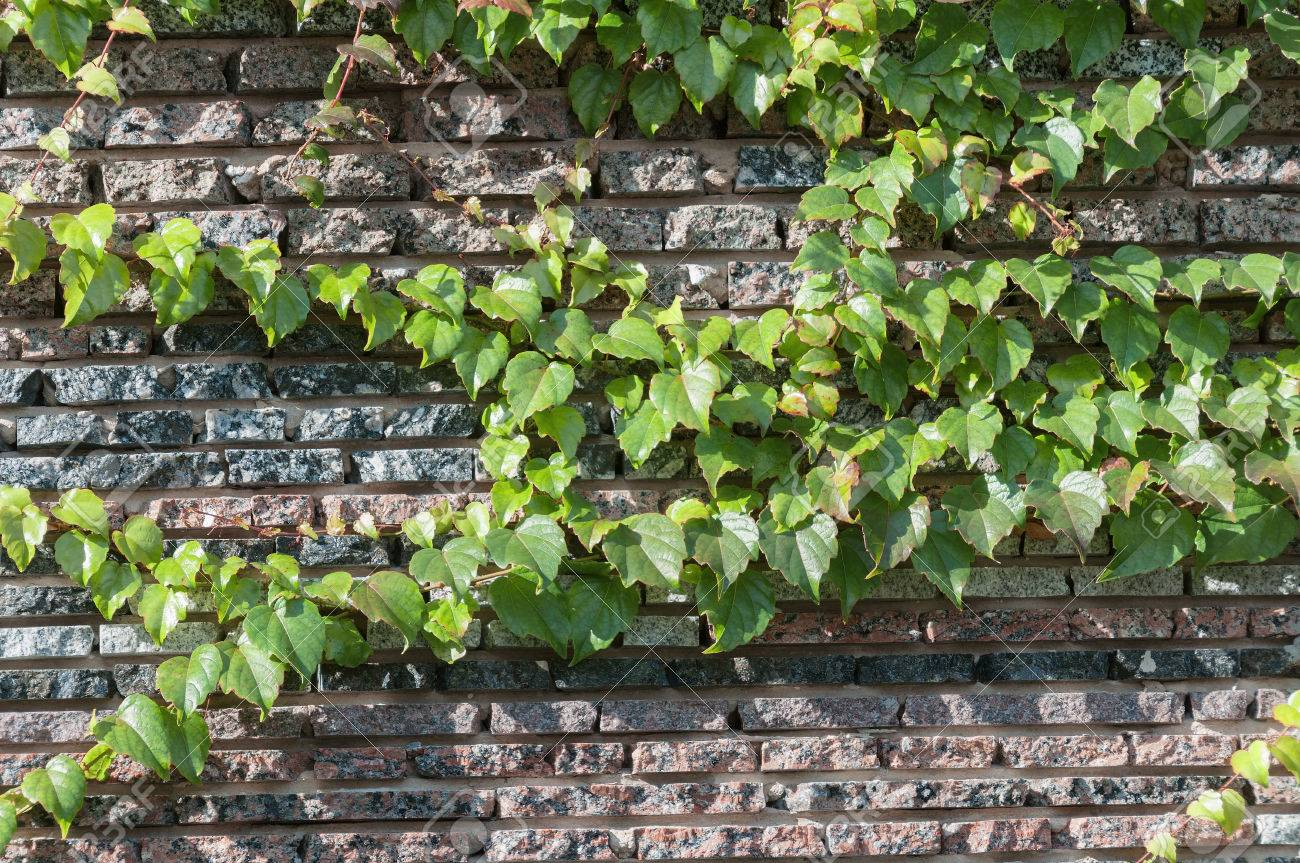 der zaun von grünflächen, stein und kletterpflanzen lizenzfreie