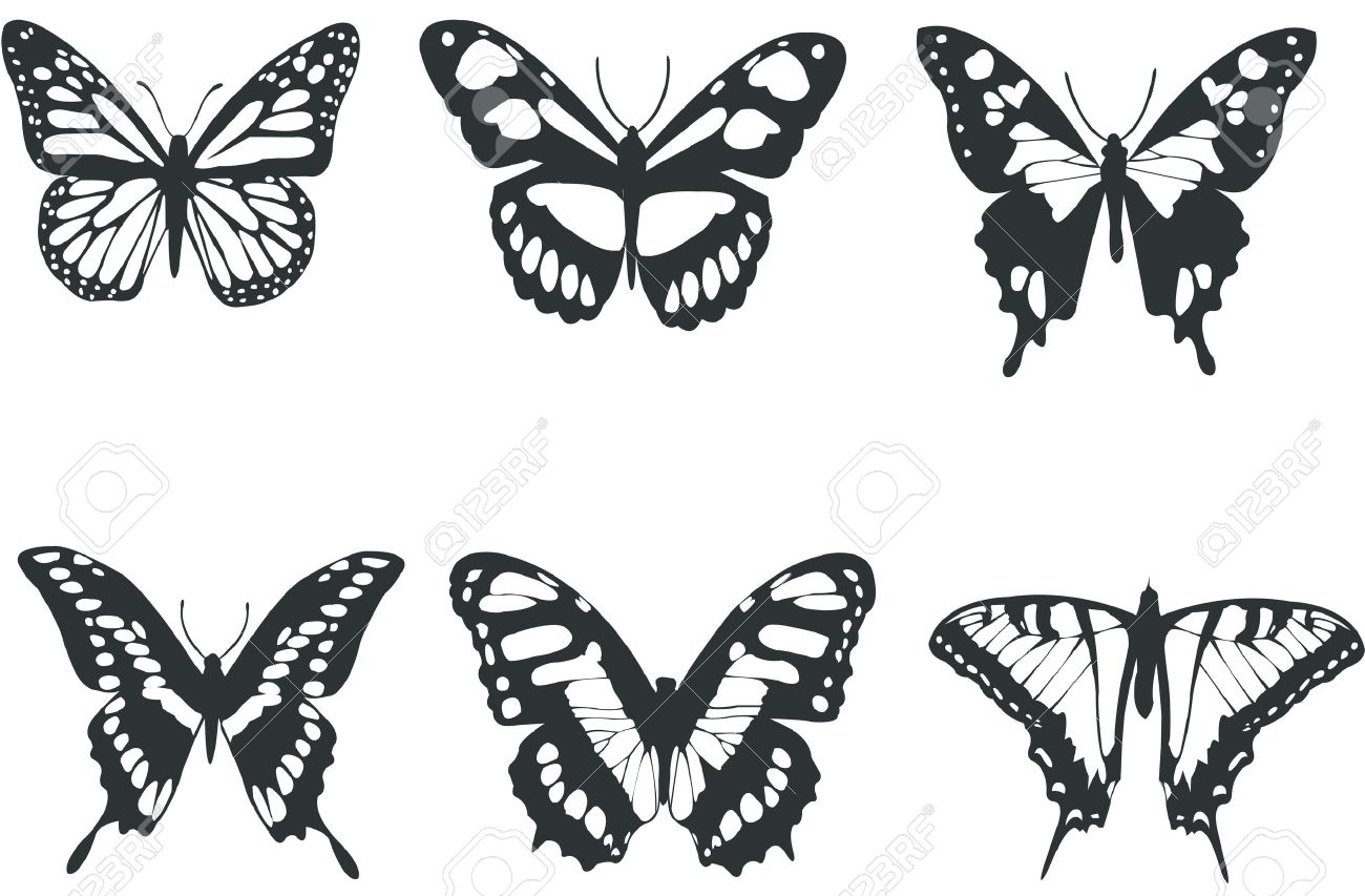 Collection Black And White Butterflies For Design Isolated On  -> Borboleta Vetor