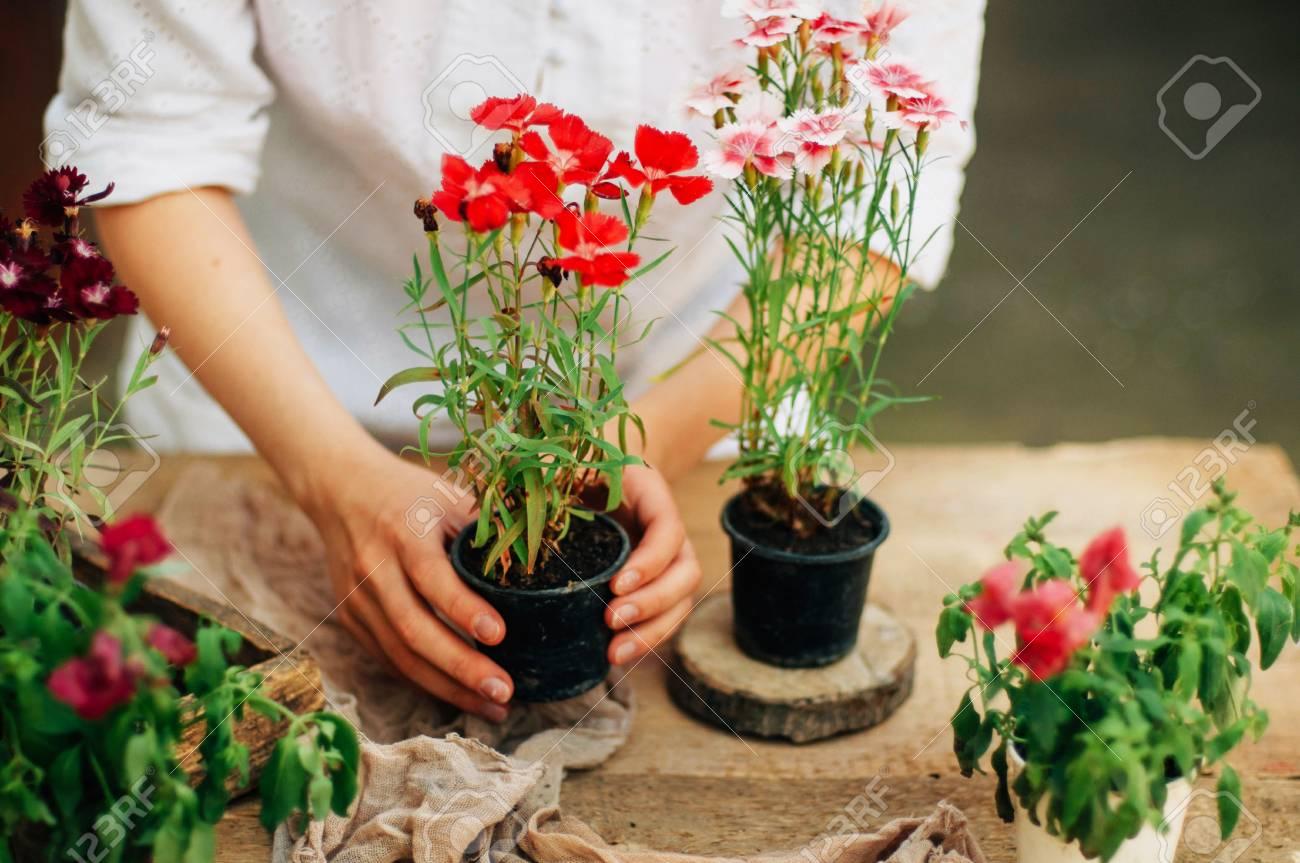 Jardinier faisant des travaux de jardinage à une table rustique. Travailler  dans le jardin, fermer les mains d\'une femme se soucie des ?illets de ...