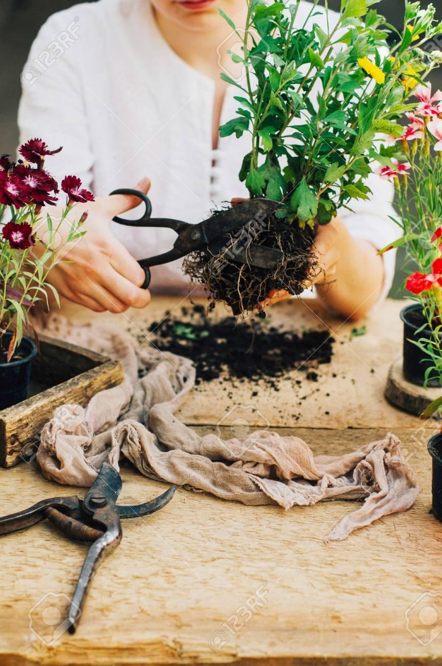 Jardinier faisant des travaux de jardinage à une table rustique. Travailler  dans le jardin, fermer les mains d\'une femme se soucie de ...