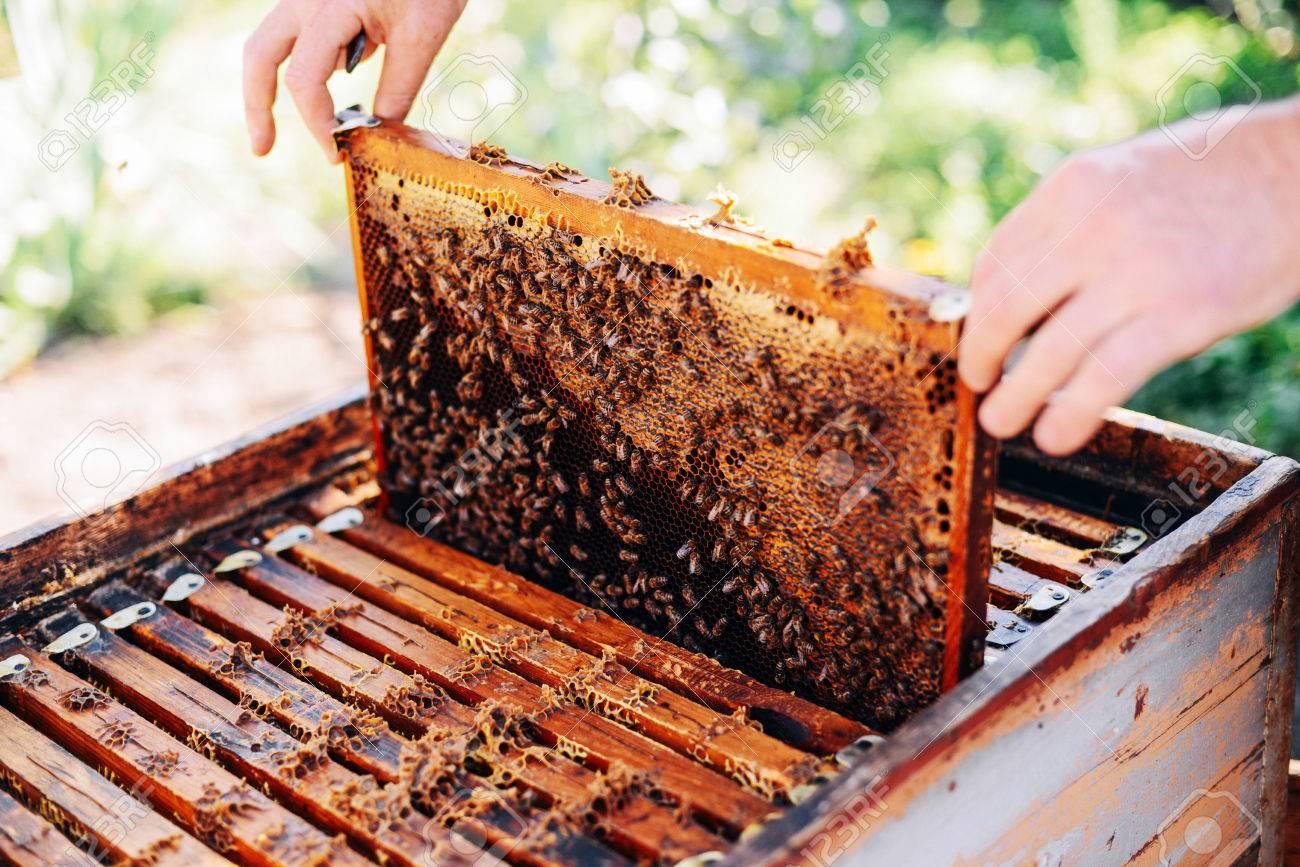 apiculteur d'abeille